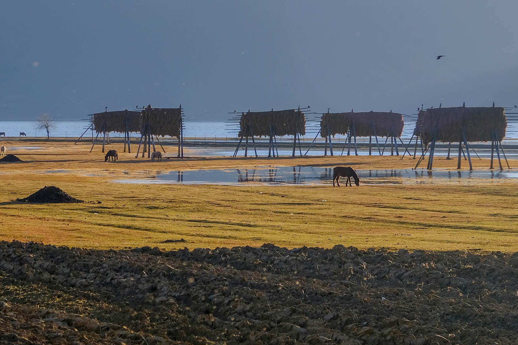 Blick auf den Napa See in Shangrila, Yunnan