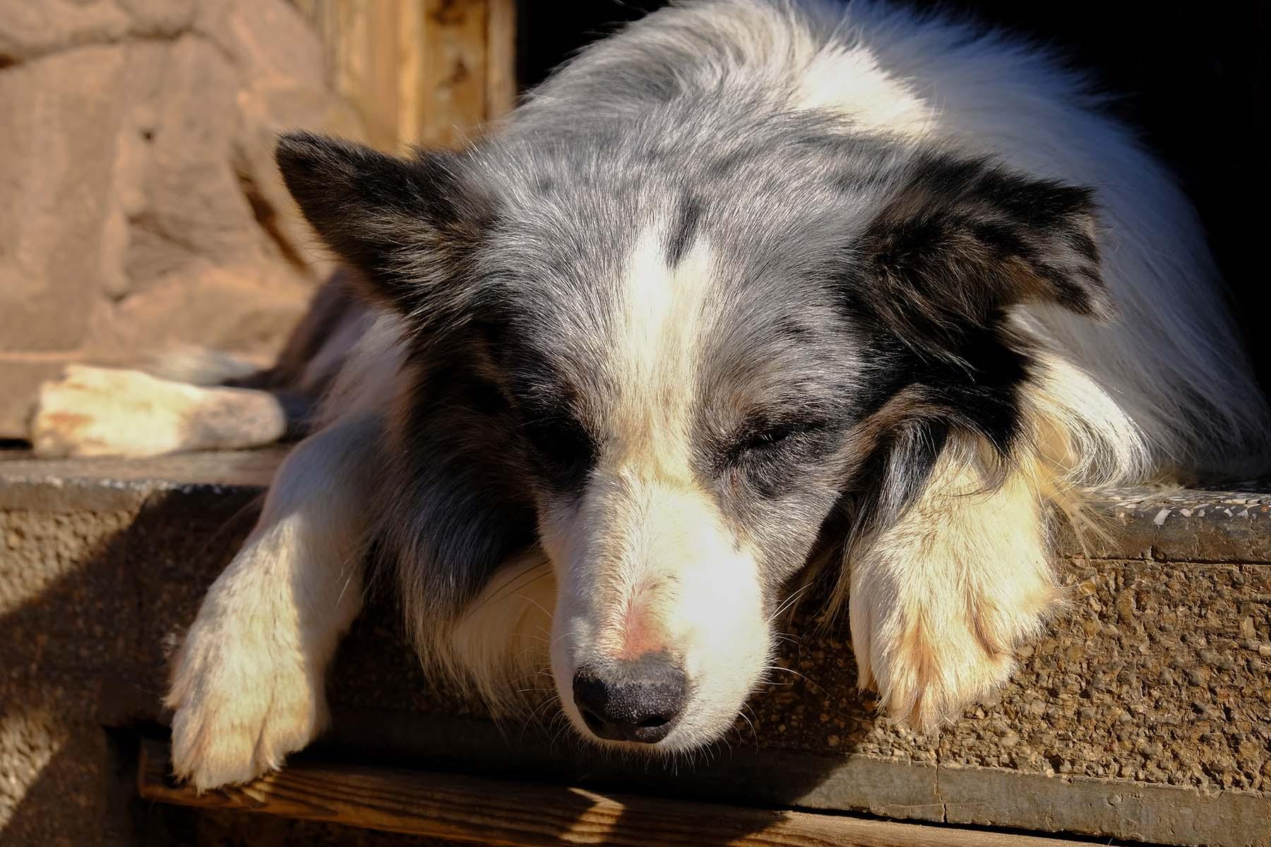 Hund schläft in der Sonne in Shuhe Altstadt in der Nähe von Lijiang, Yunnan