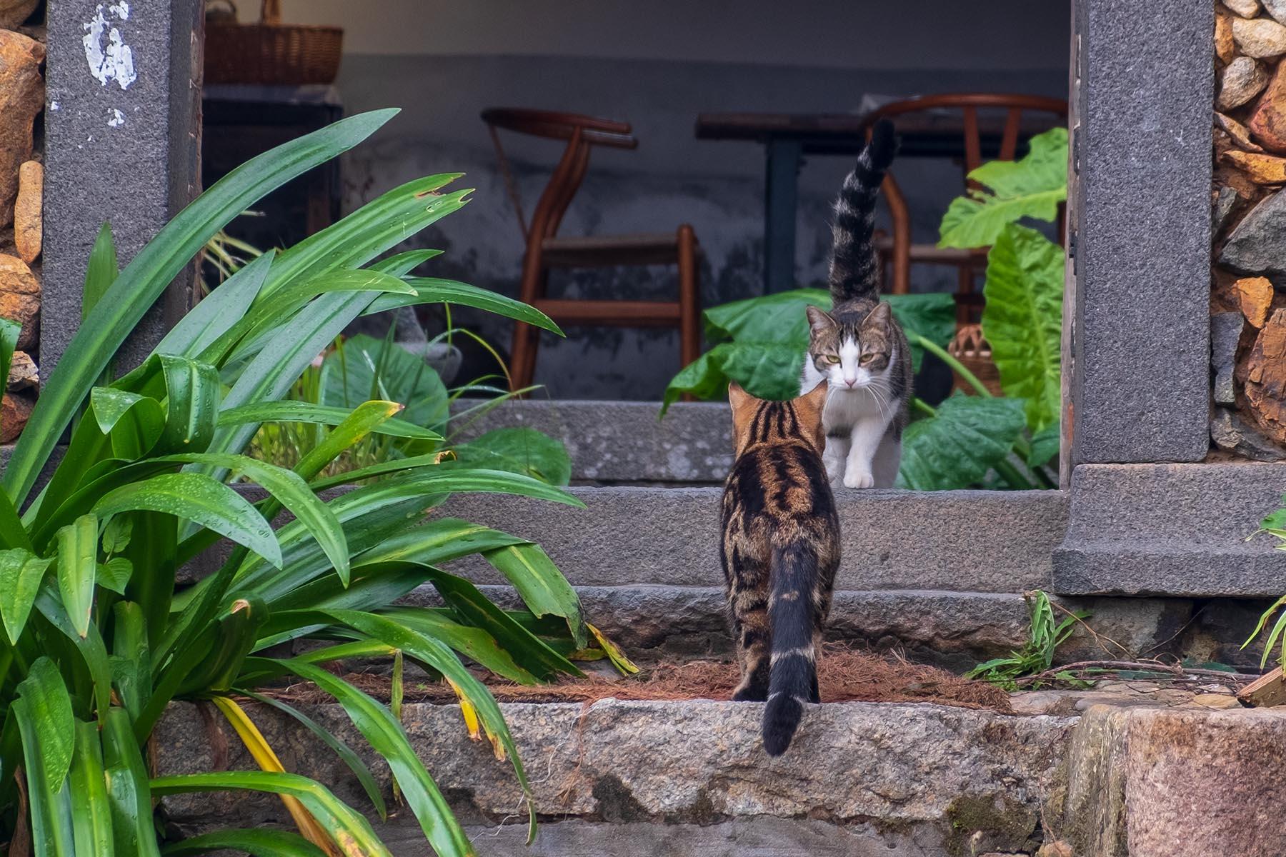Zwei Katzen in Zhangjiao in der Provinz Fujian, China