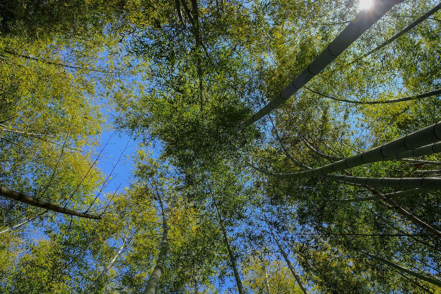 Wandern im Bambuswald im Nine Dragon Lake Park in Ningbo, China
