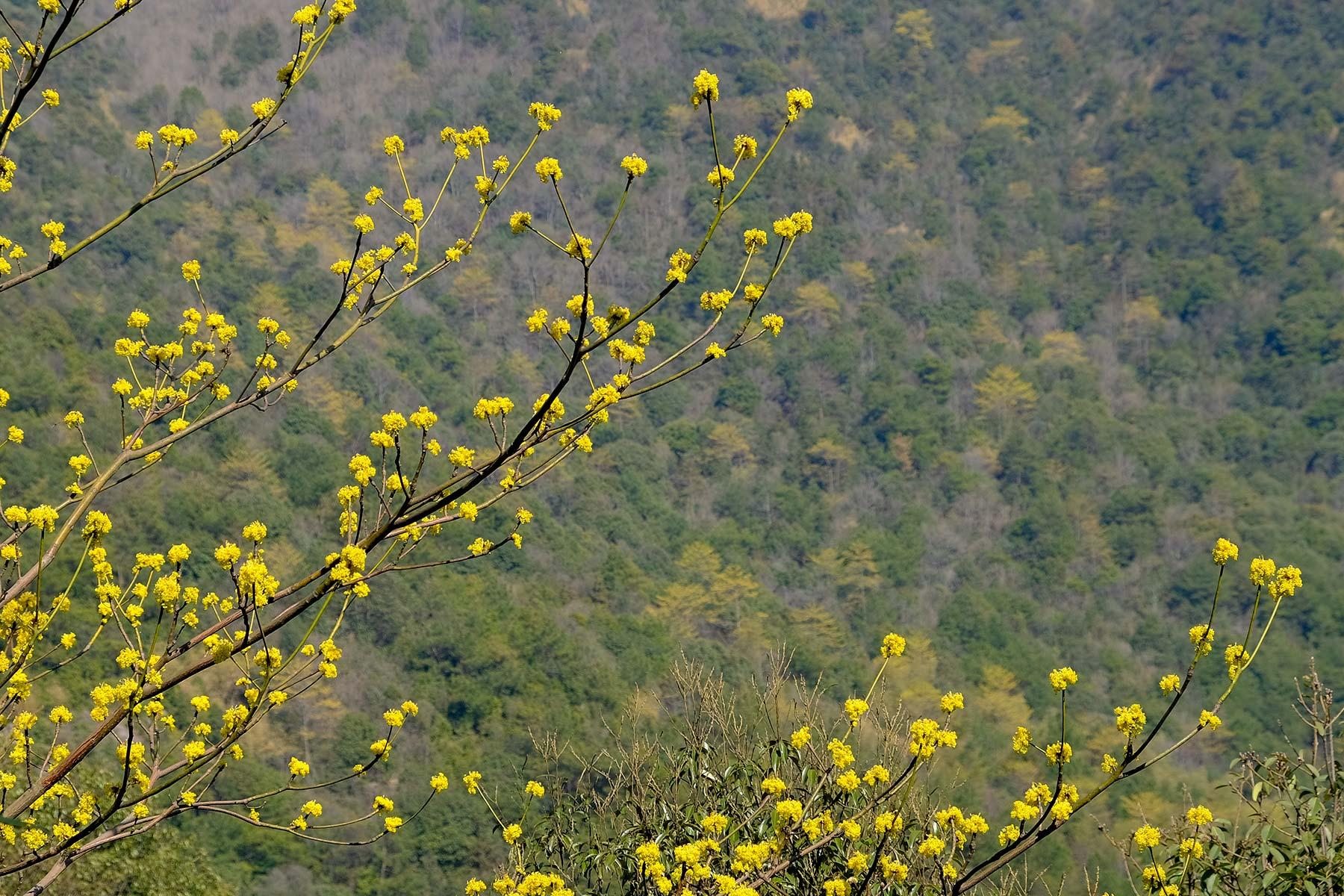 Wandern im Frühling im Nine Dragon Lake Park in Ningbo, China