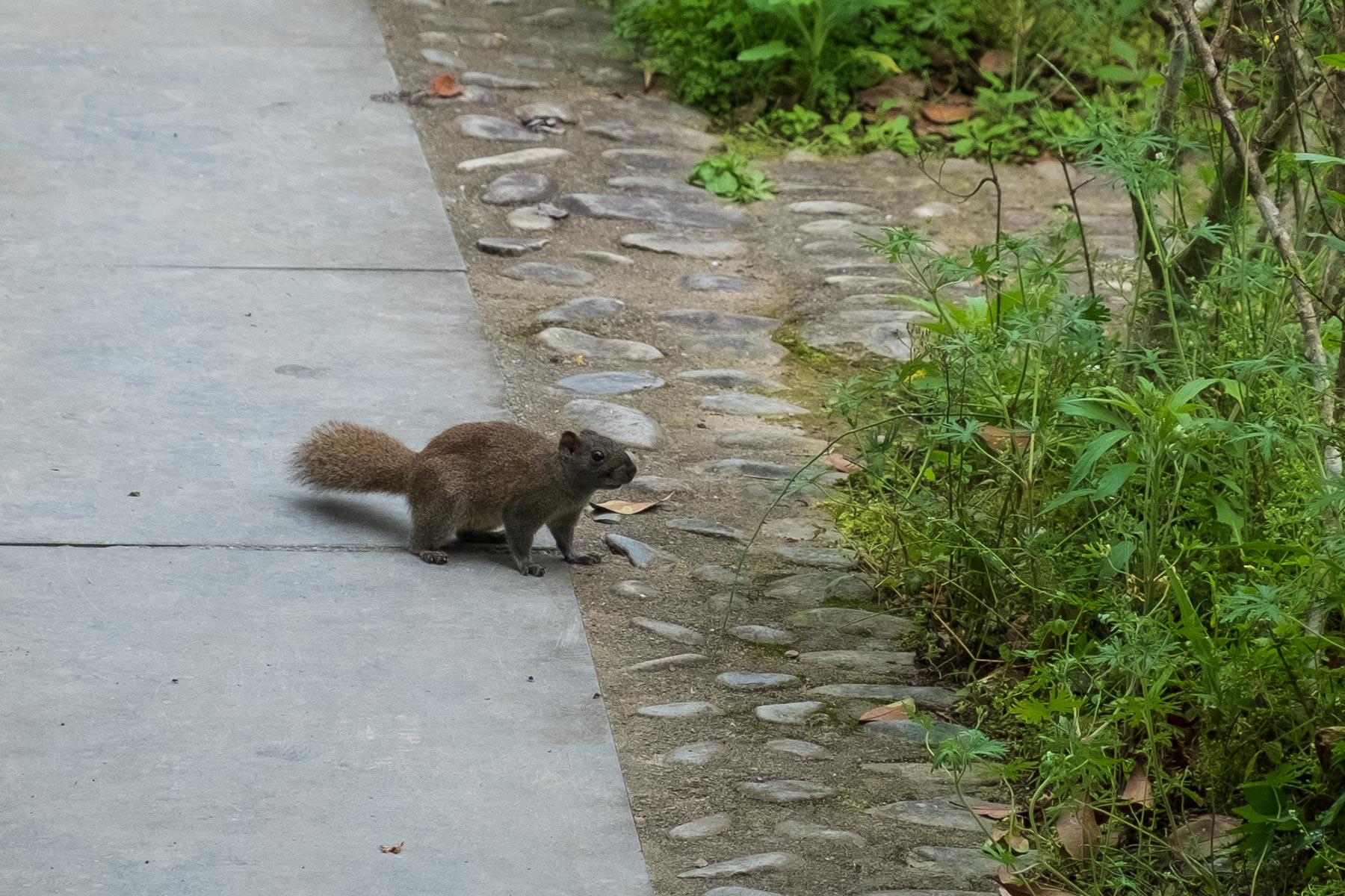 Eichhörnchen in der historischen Altstadt Nanping in Anhui, China