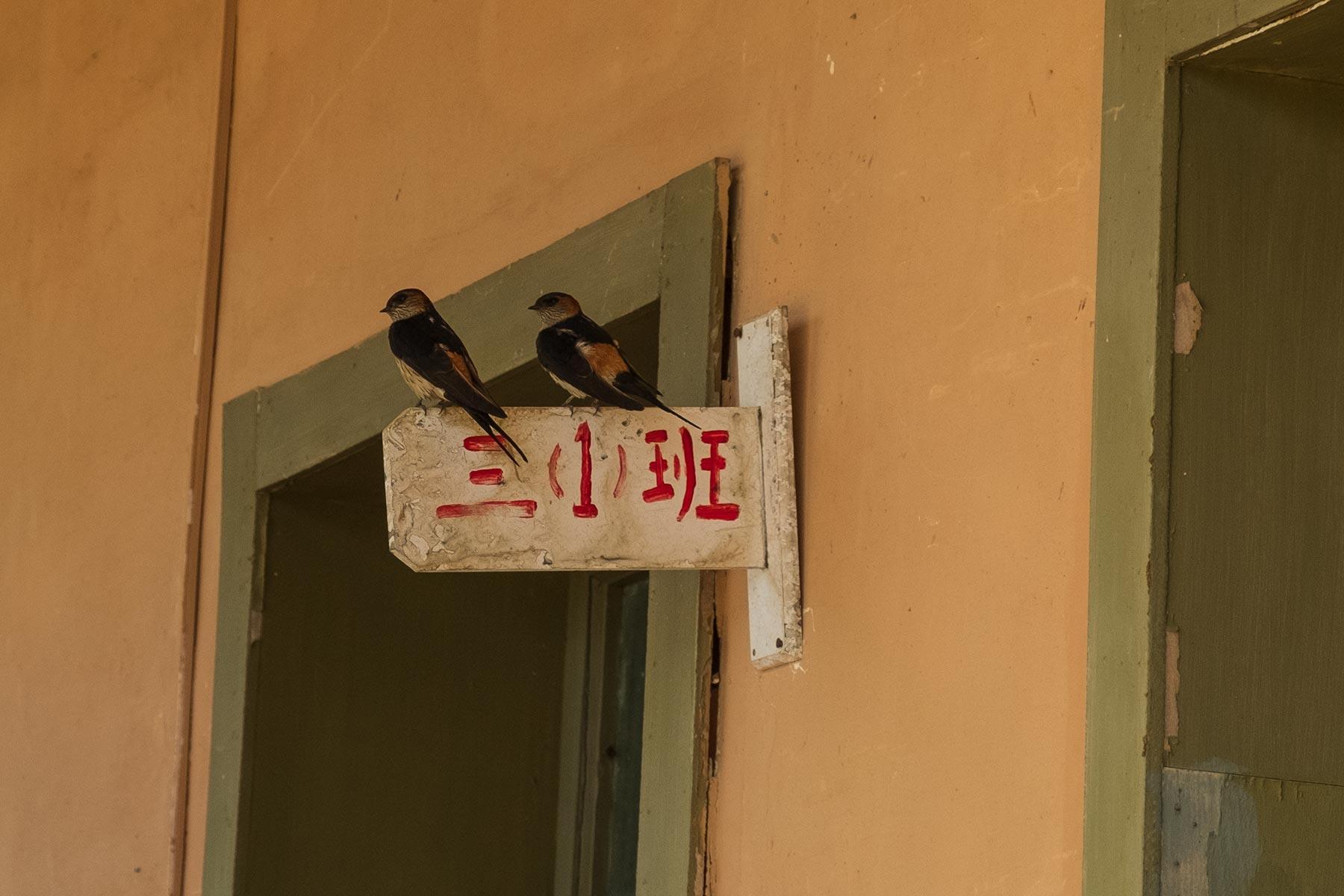 Schwalben in Yangchan Tulou 阳产土楼 Erdhäuser Dorf in Anhui, China