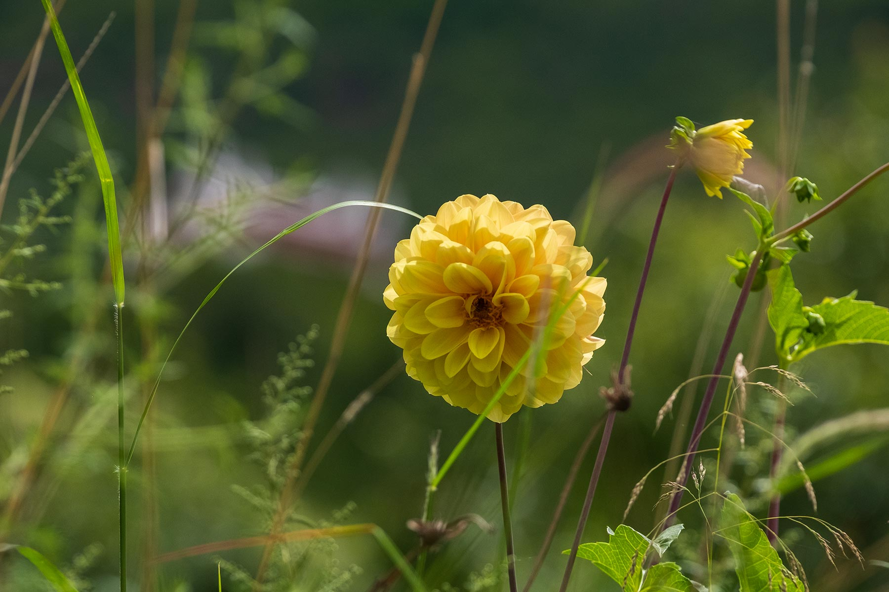 Gelbe Blume Nahaufnahme