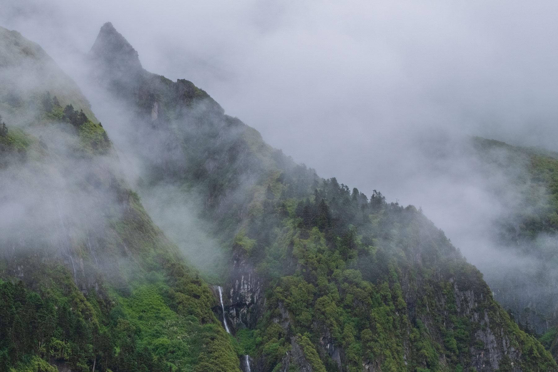 Wald in Regenwolken im Vogel im Hailuogou Gletscher Park in Sichuan