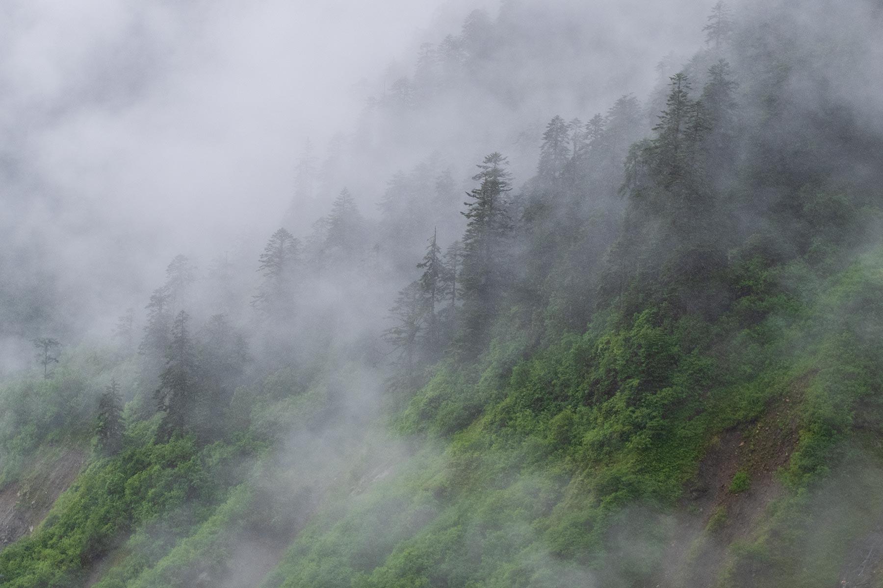 Regen und Wolken im Wald im Vogel im Hailuogou Gletscher Park in Sichuan