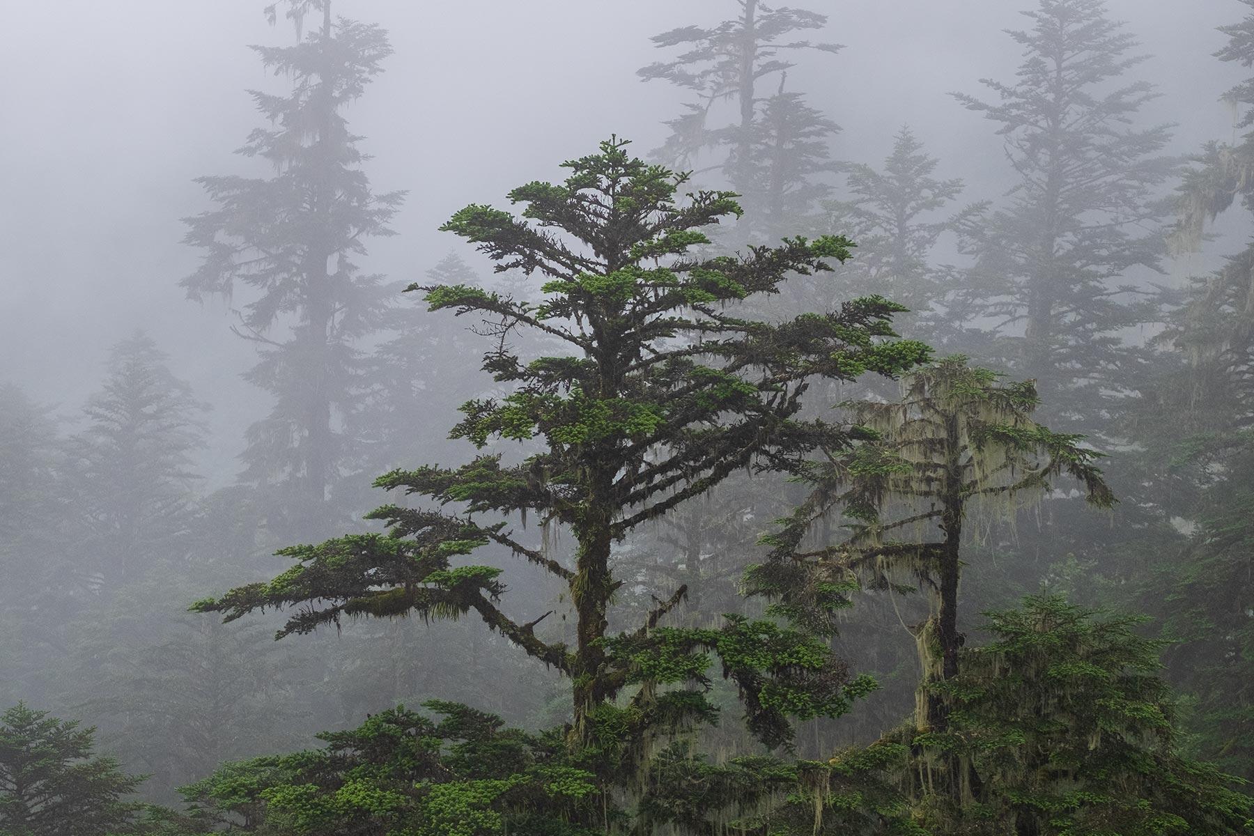Bäume im Regen im Vogel im Hailuogou Gletscher Park in Sichuan