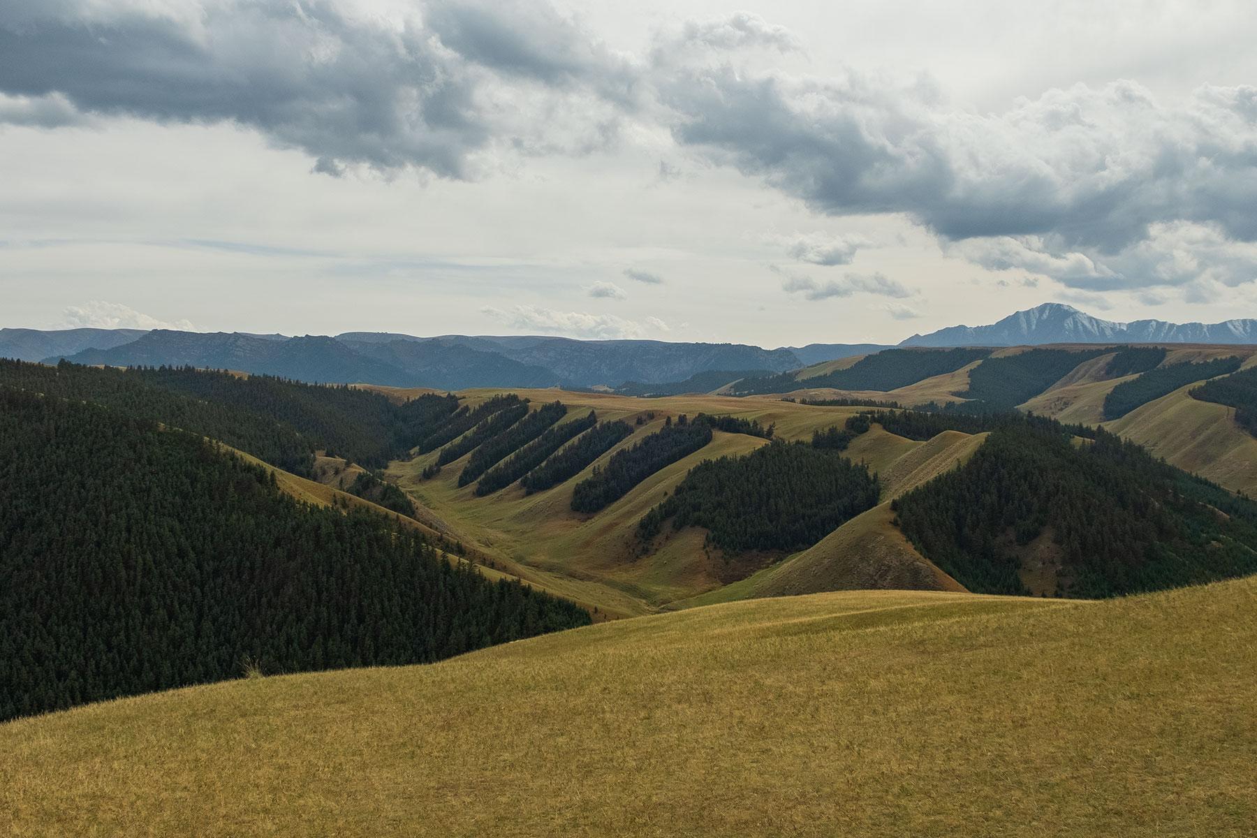 8 Pinienwälder im Kangle Grassland in Gansu in China