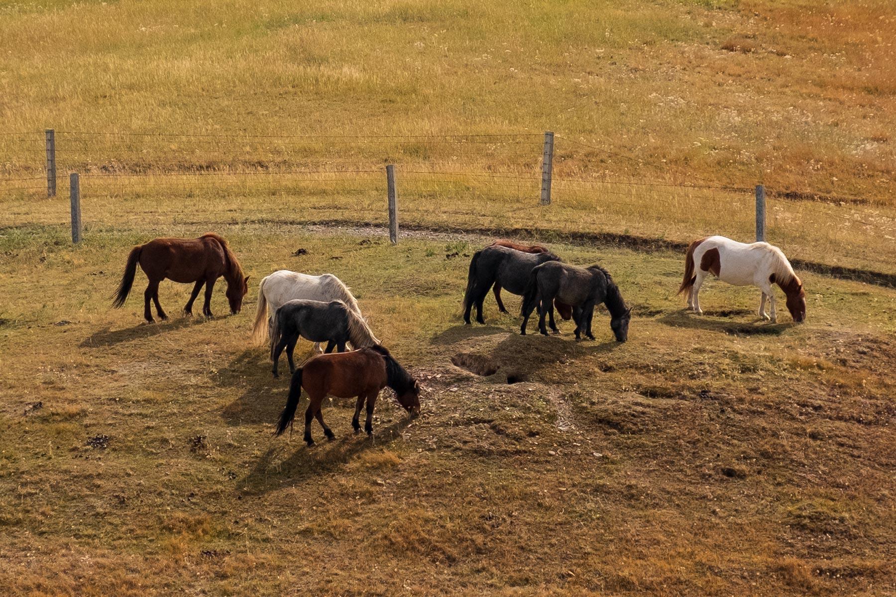 Pferde auf Wiese im Kangle Grassland in Gansu in China
