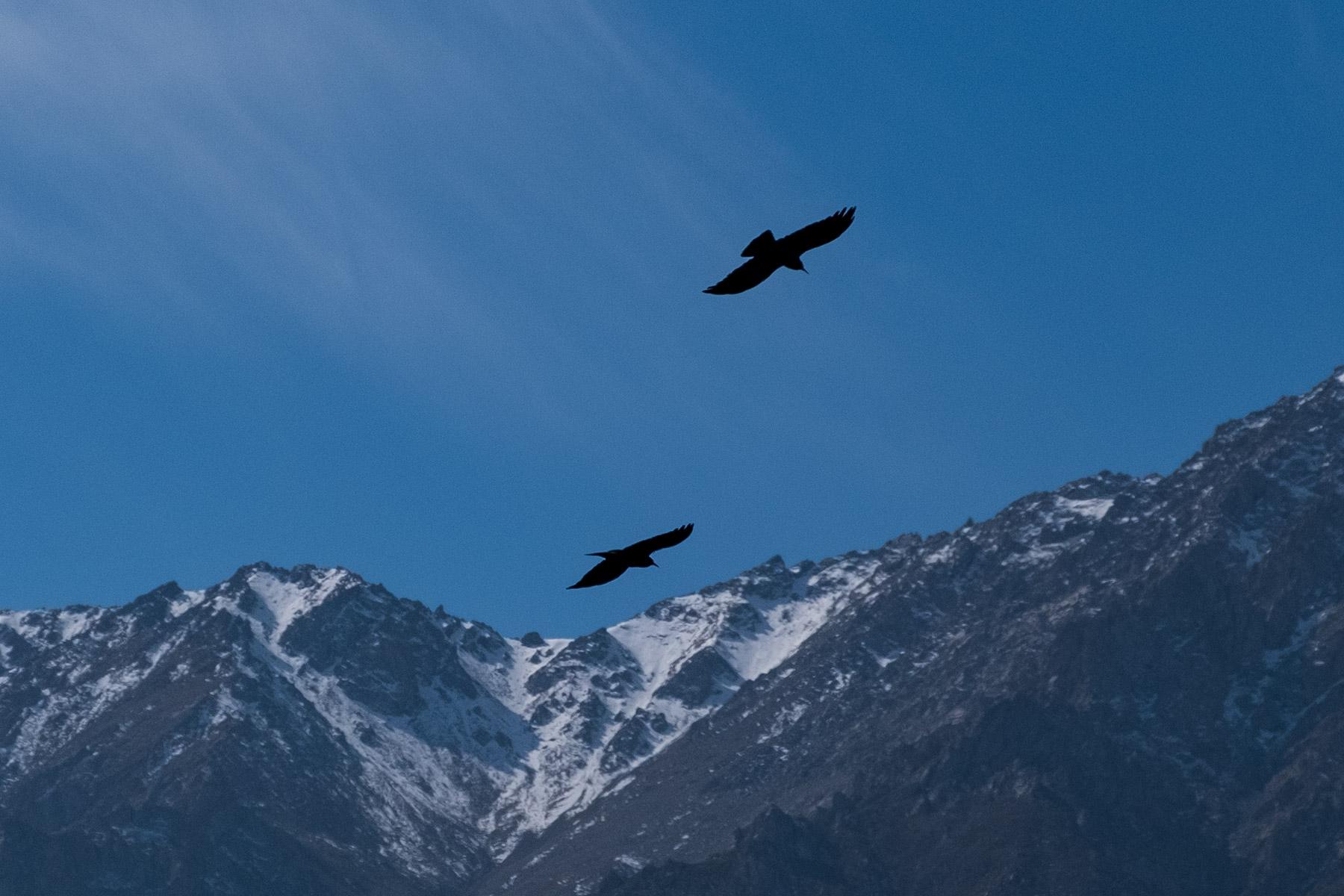 Raben in der Luft vor Bergen mit Schnee in Gansu