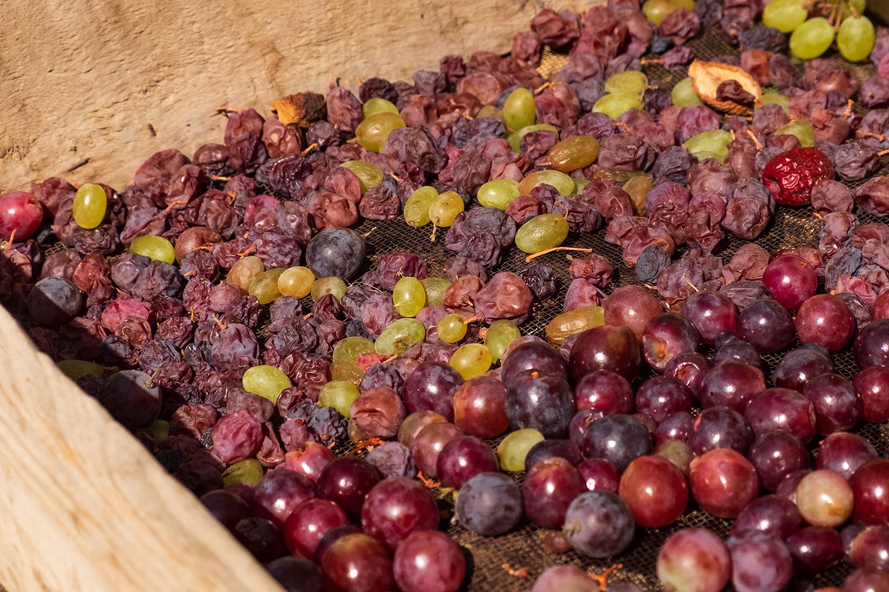 Rosinen und getrocknete Weintrauben in Gansu