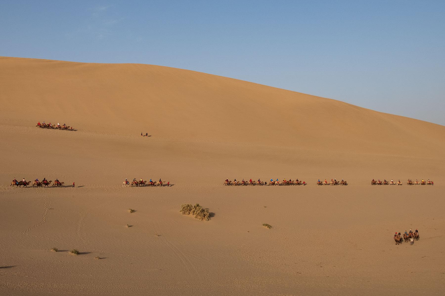 Kamele in der Mingsha Wüste in Dunhuang in China