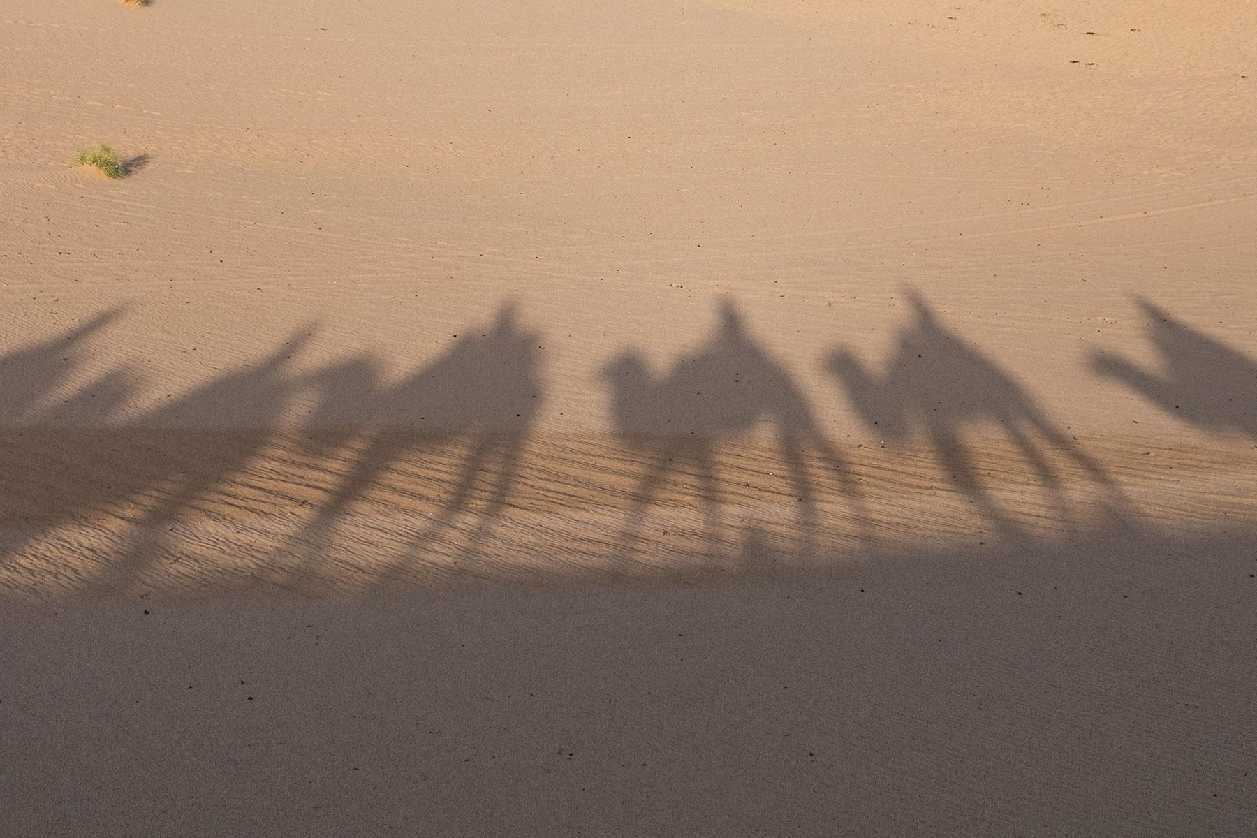 Kamel Schatten in der Mingsha Wüste in Dunhuang in China
