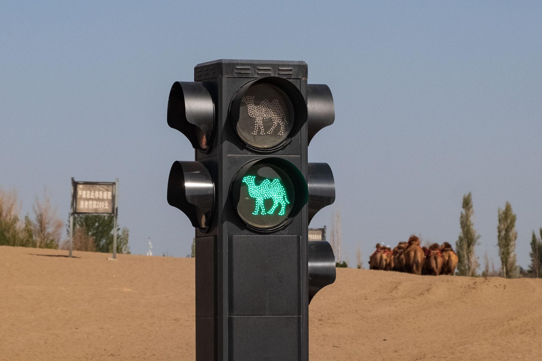 Kamelampel in der Mingsha Wüste in Dunhuang in China mit Kamelen