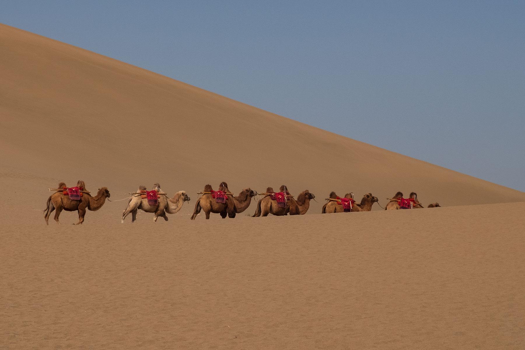Mingsha Wüste in Dunhuang in China mit Kamelen