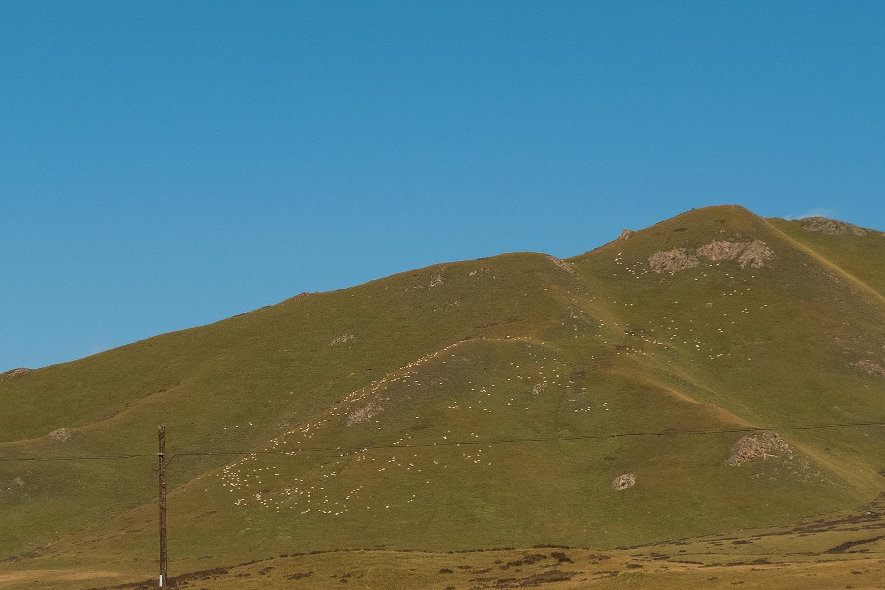 Schafe auf einem Berg in Gansu China