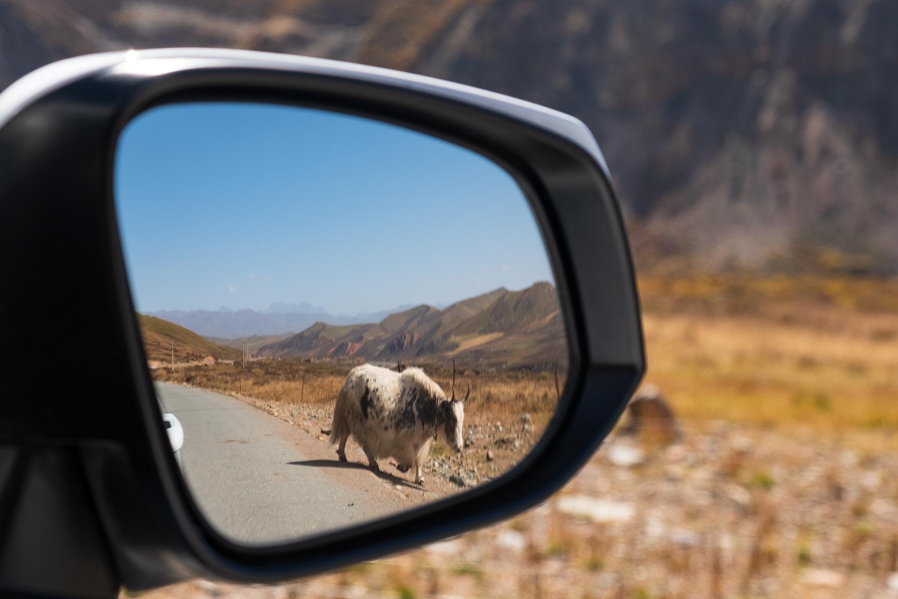 Yak im Rückspiegel in Gansu China in den Bergen