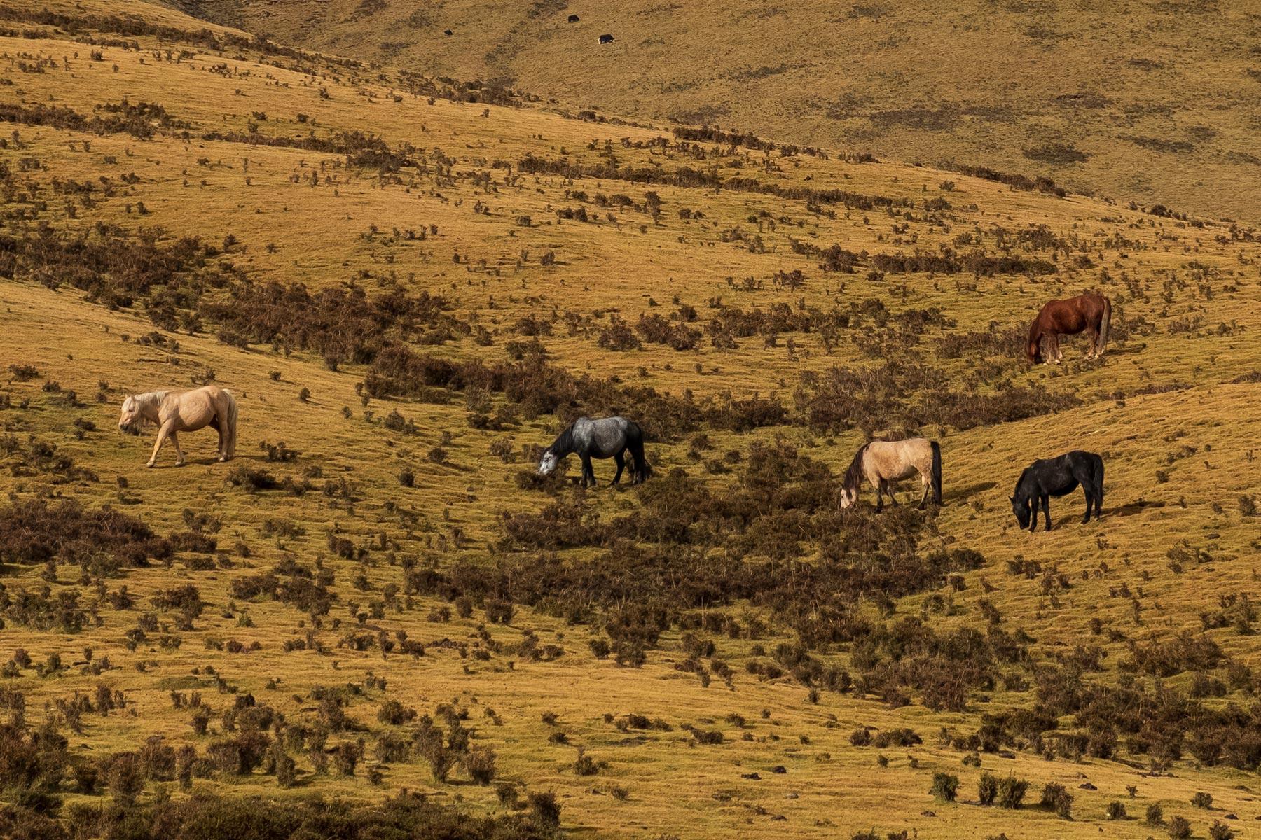 Fahrt von Gansu nach Qinghai durch die Berge mit Pferden