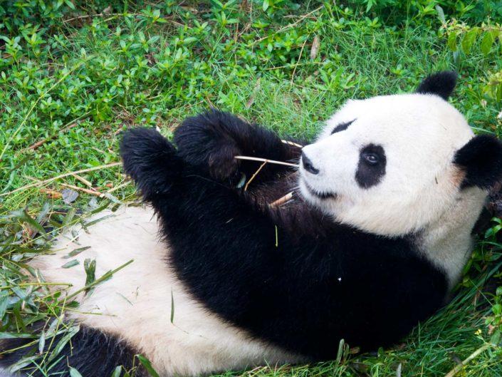 Chengdu, Sichuan – Mao, Pandas und Emei Shan