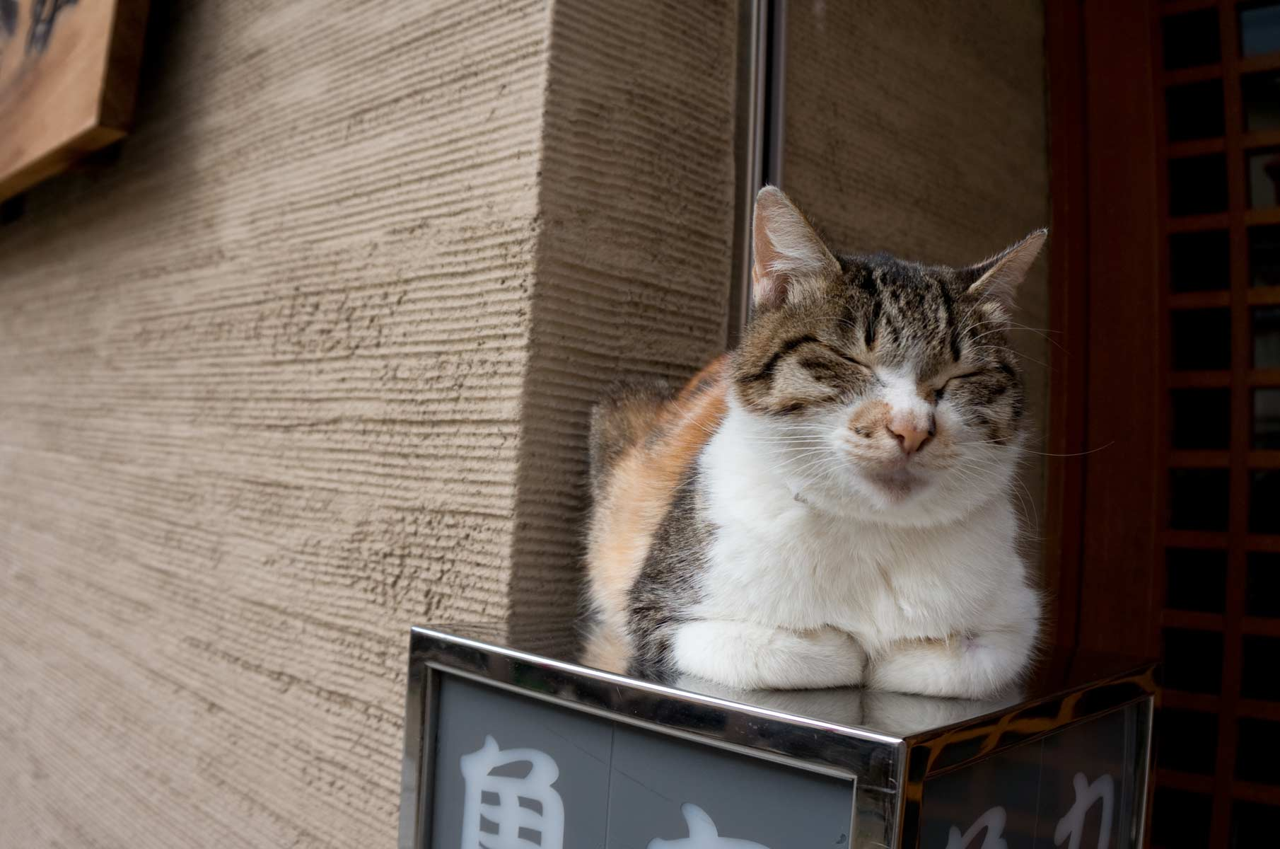 Schlafende Katze in Osaka, Japan