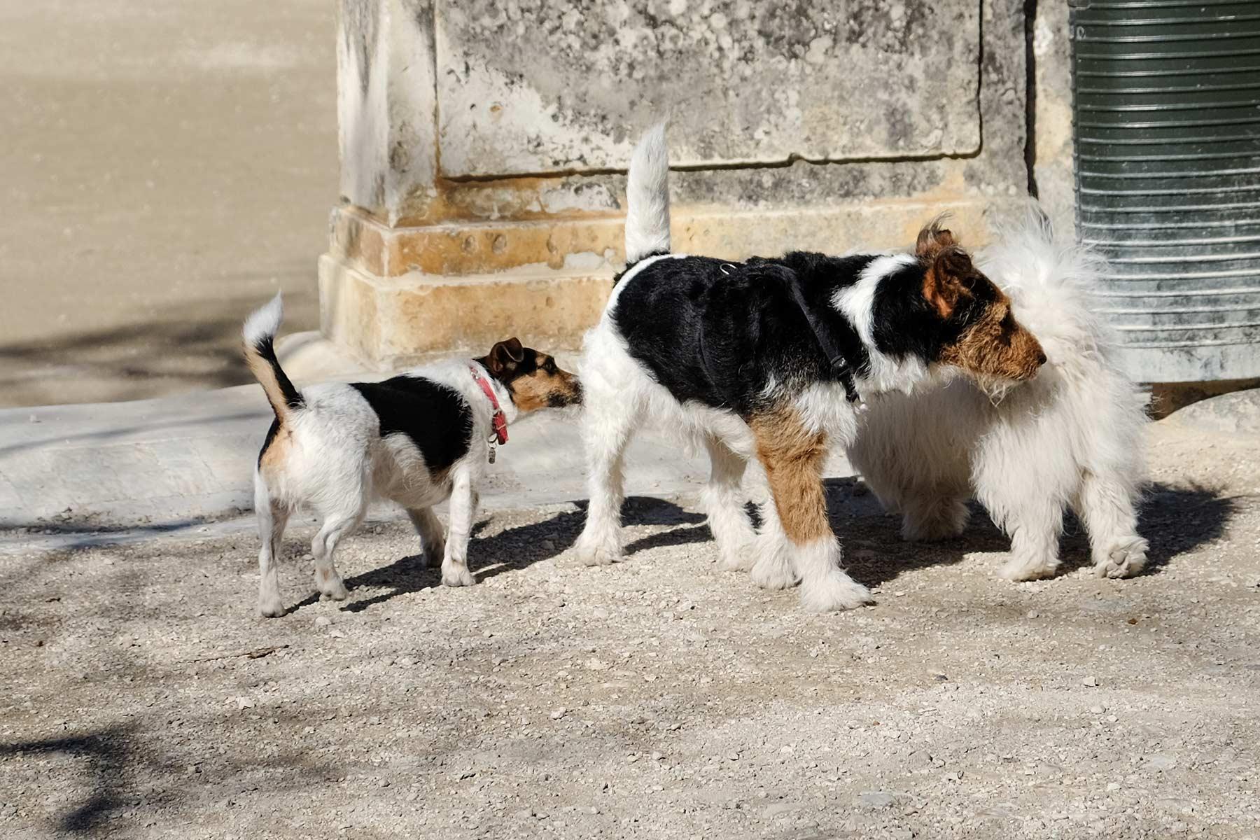 Drei Hunde im Jardin de la Fontaine in Nîmes, Frankreich