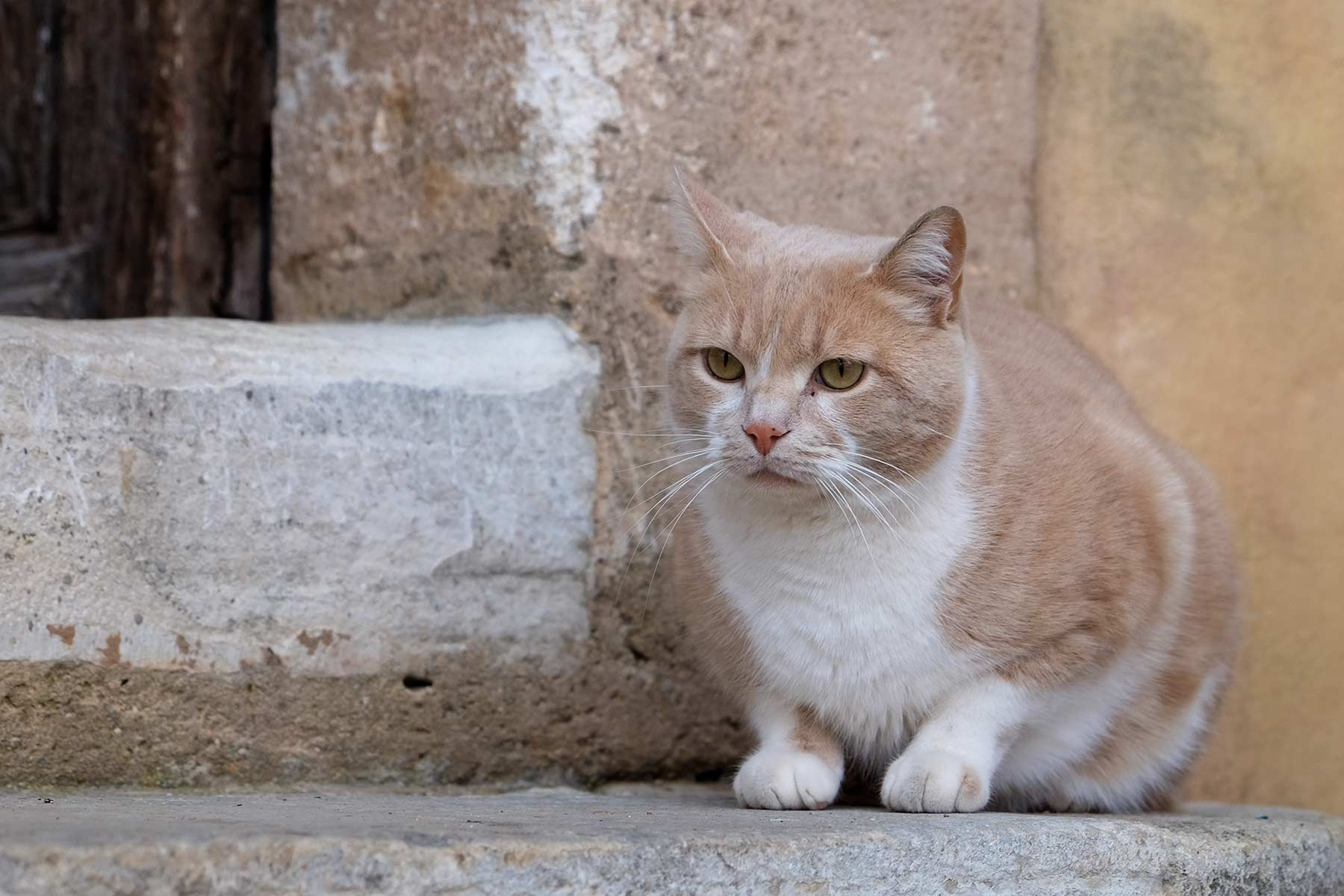 Katze in Roussillon in der Provence, Frankreich