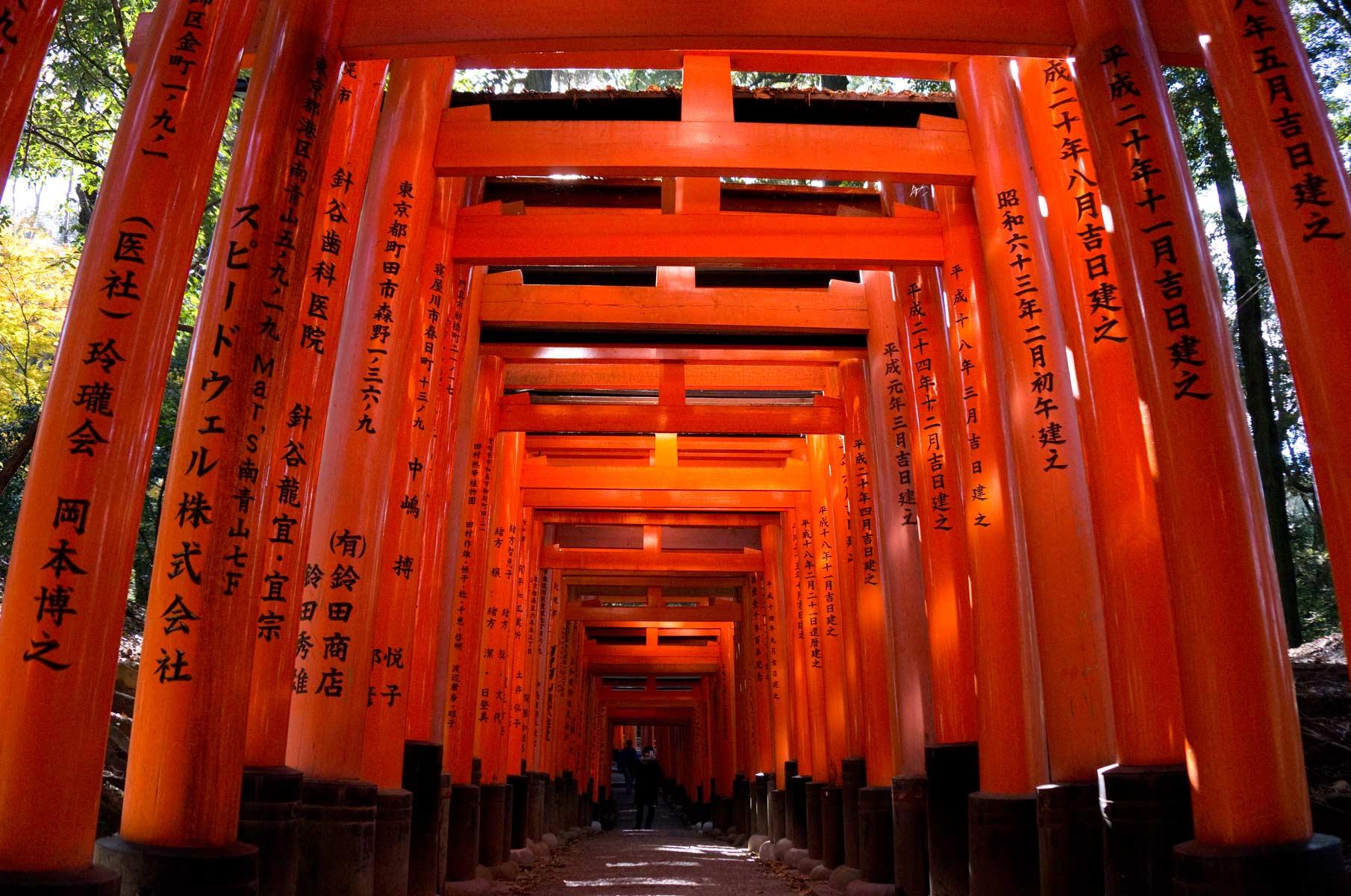 Torii Tore am Fushimi Inari-Taisha Schrein in Kyoto, Japan