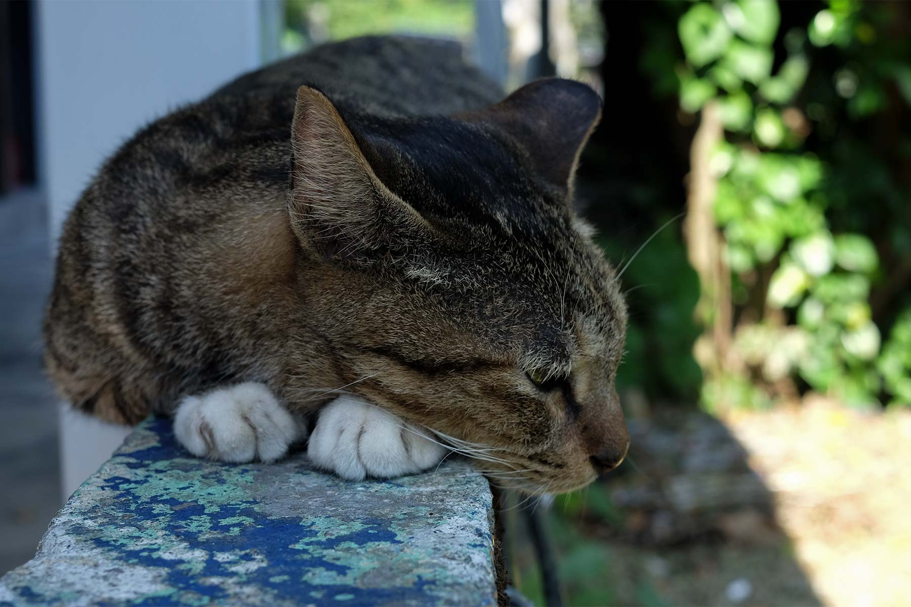 Houtong Cat Village Katzendorf in Taiwan