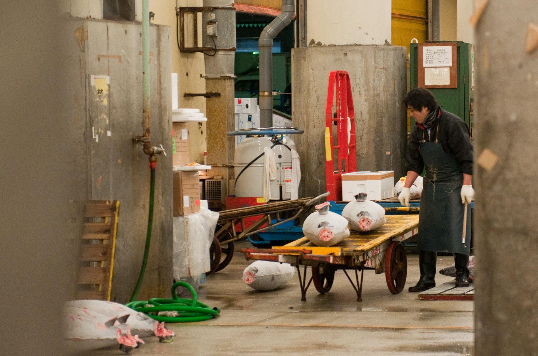 Thunfische zur Auktion auf dem Tsukiji Fischmarkt in Tokyo, Japan