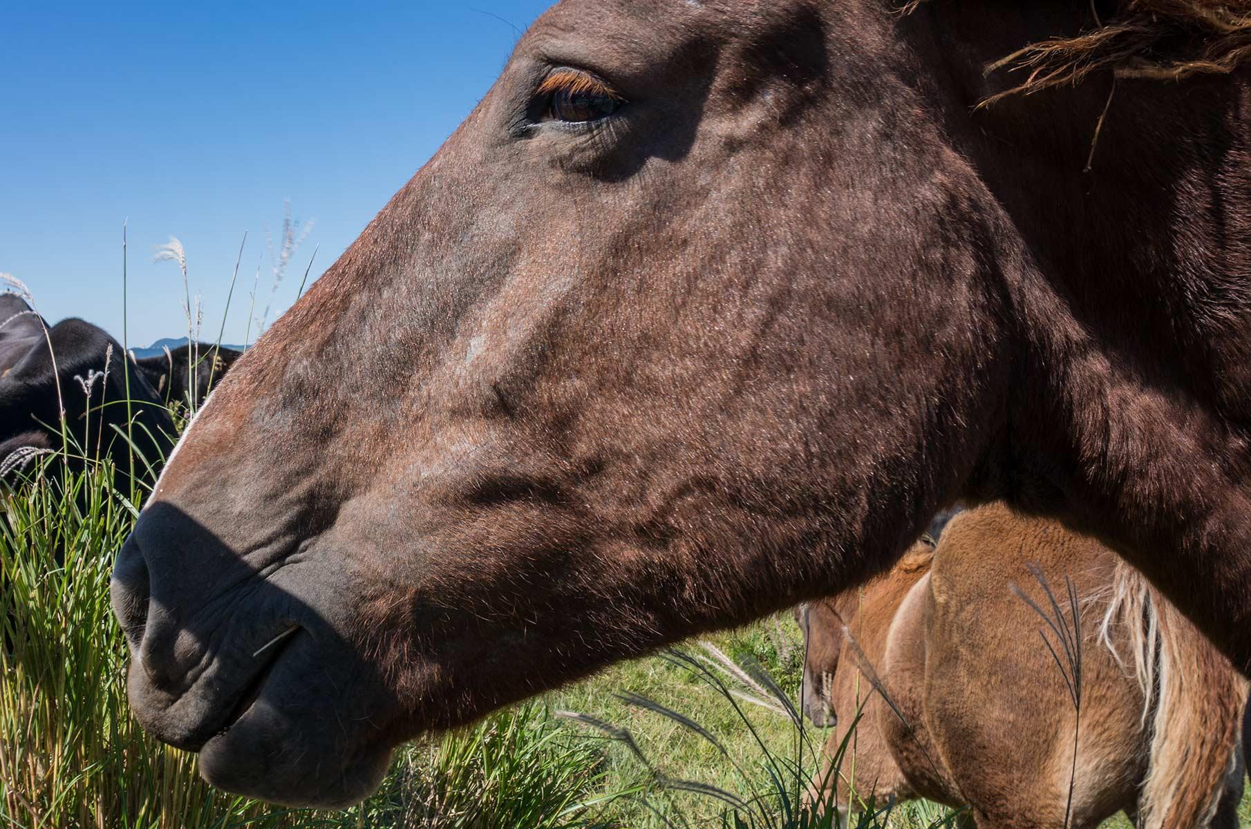 Pferd in der Mt. Aso Gras- und Vulkanlandschaft, Japan