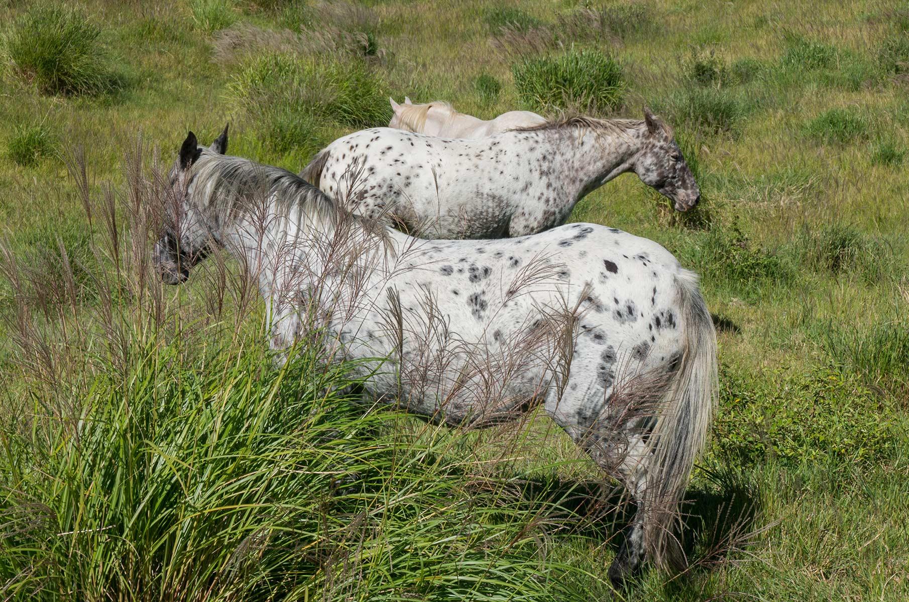 Pferde in der Mt. Aso Gras- und Vulkanlandschaft, Japan