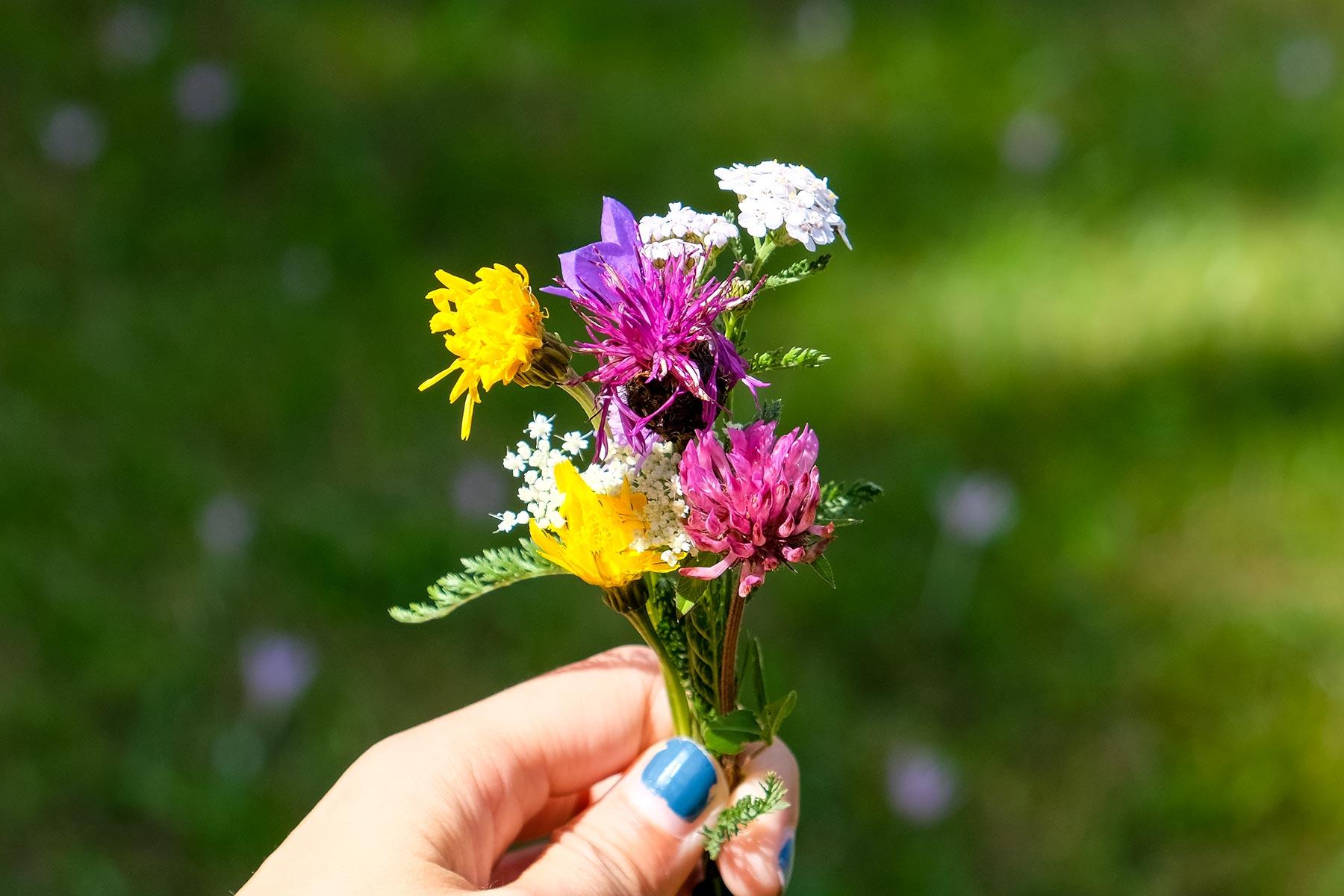 Blumen von einer Wiese in Holzgau in Österreich