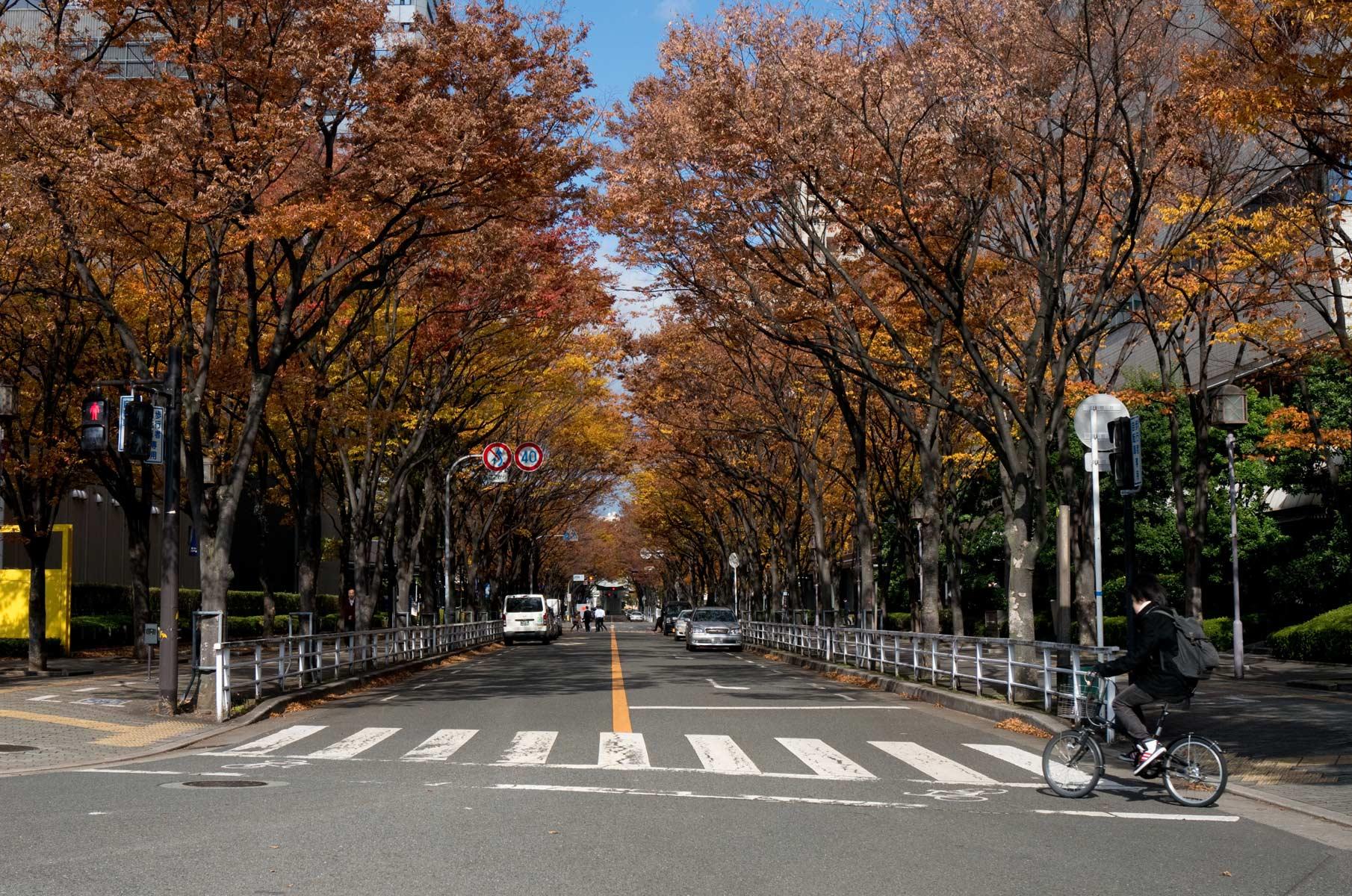Straße im Herbst in Osaka, Japan