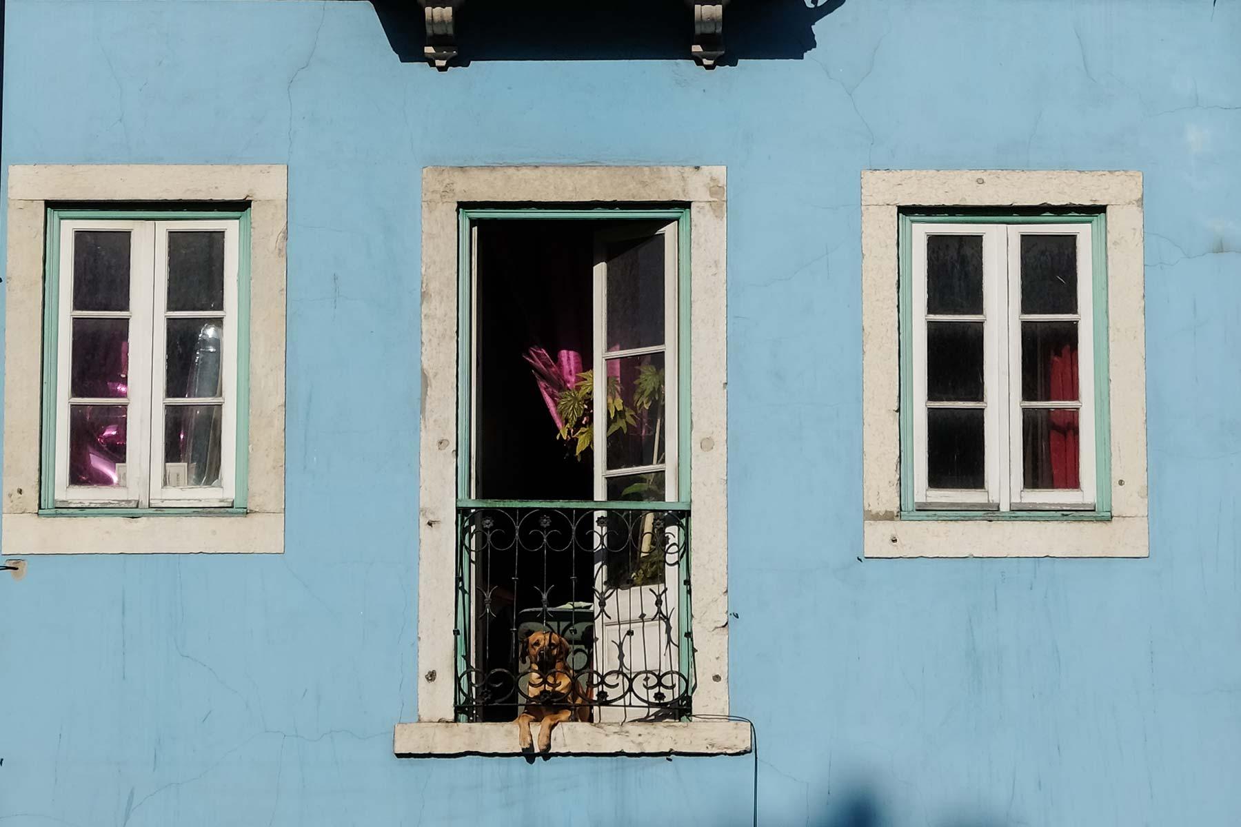 Hund in Lissabon, Portugal