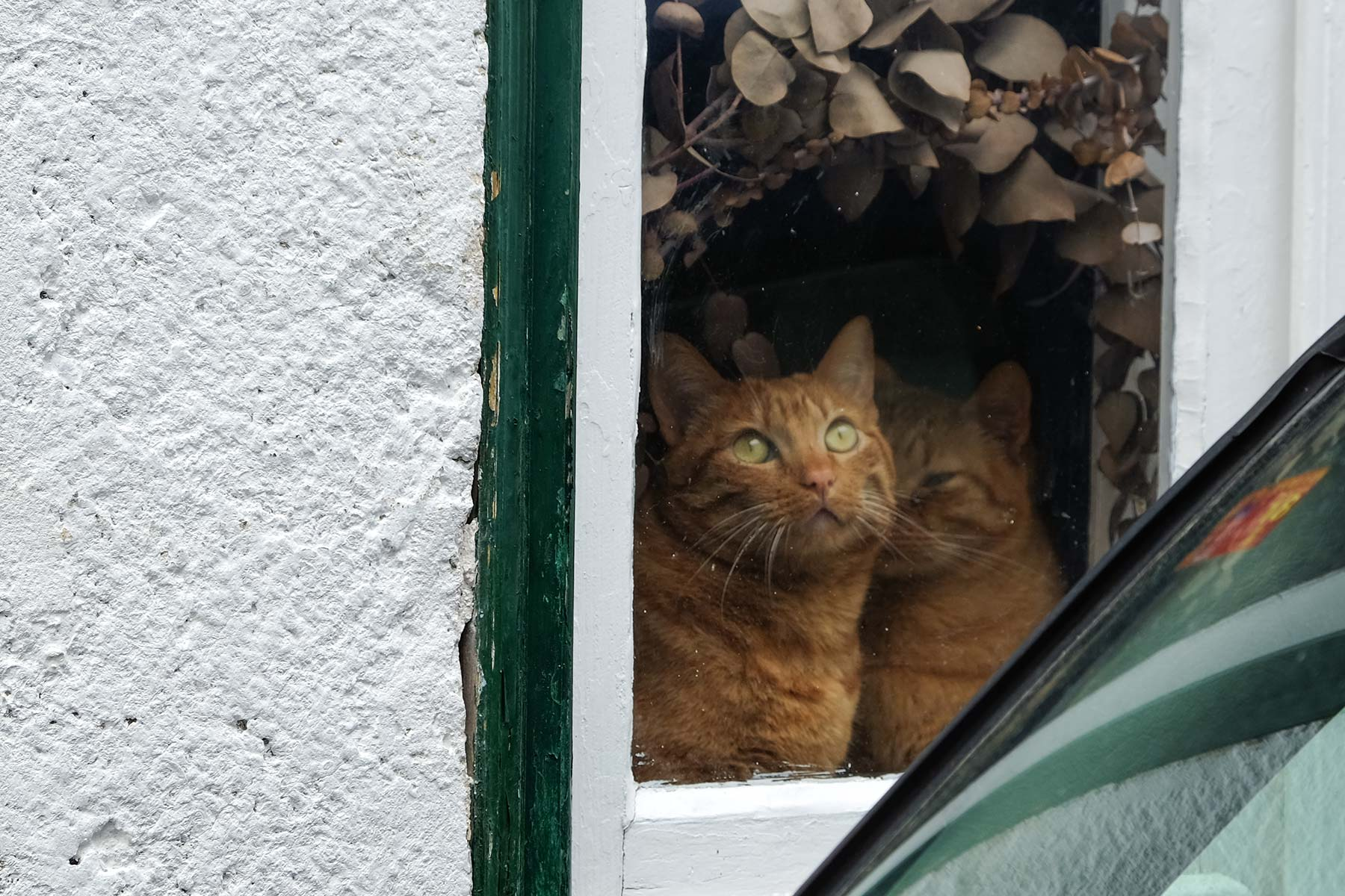 Katzen im Fenster in Lissabon, Portugal