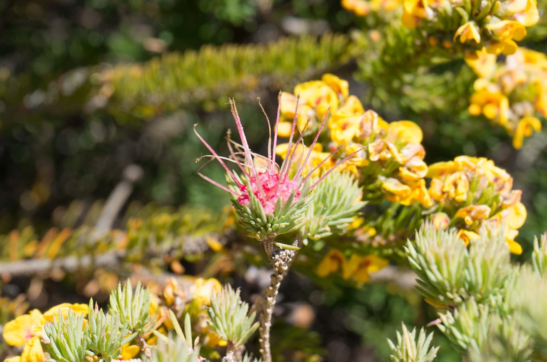 Pflanzen im Royal National Park, Australien