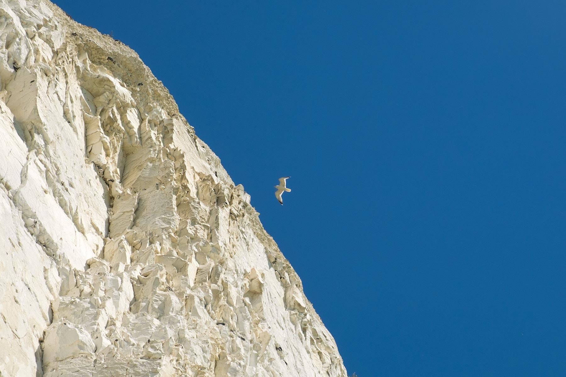 White Cliffs Seven Sister an der Küste im Süden von England