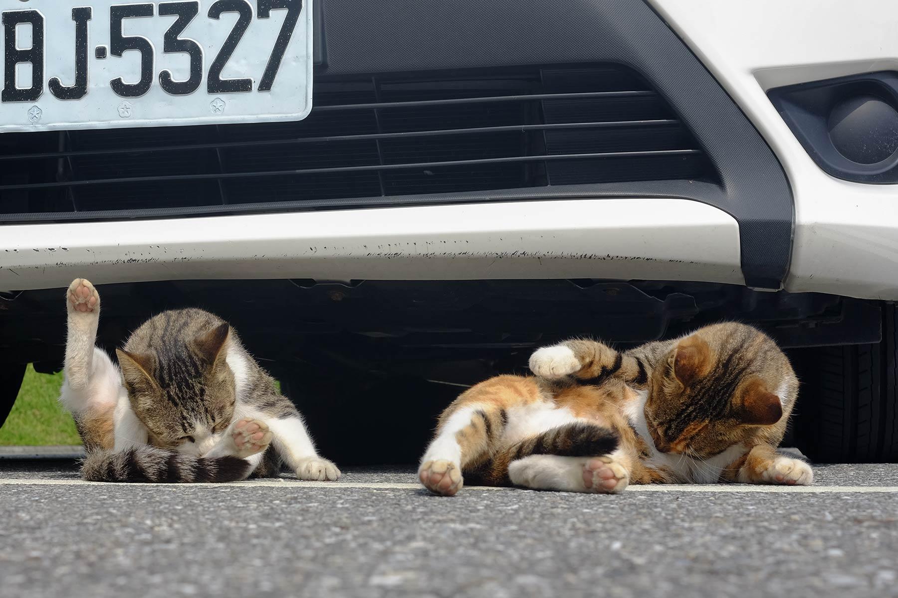 Mittagspausen bei Katzen in Taiwan