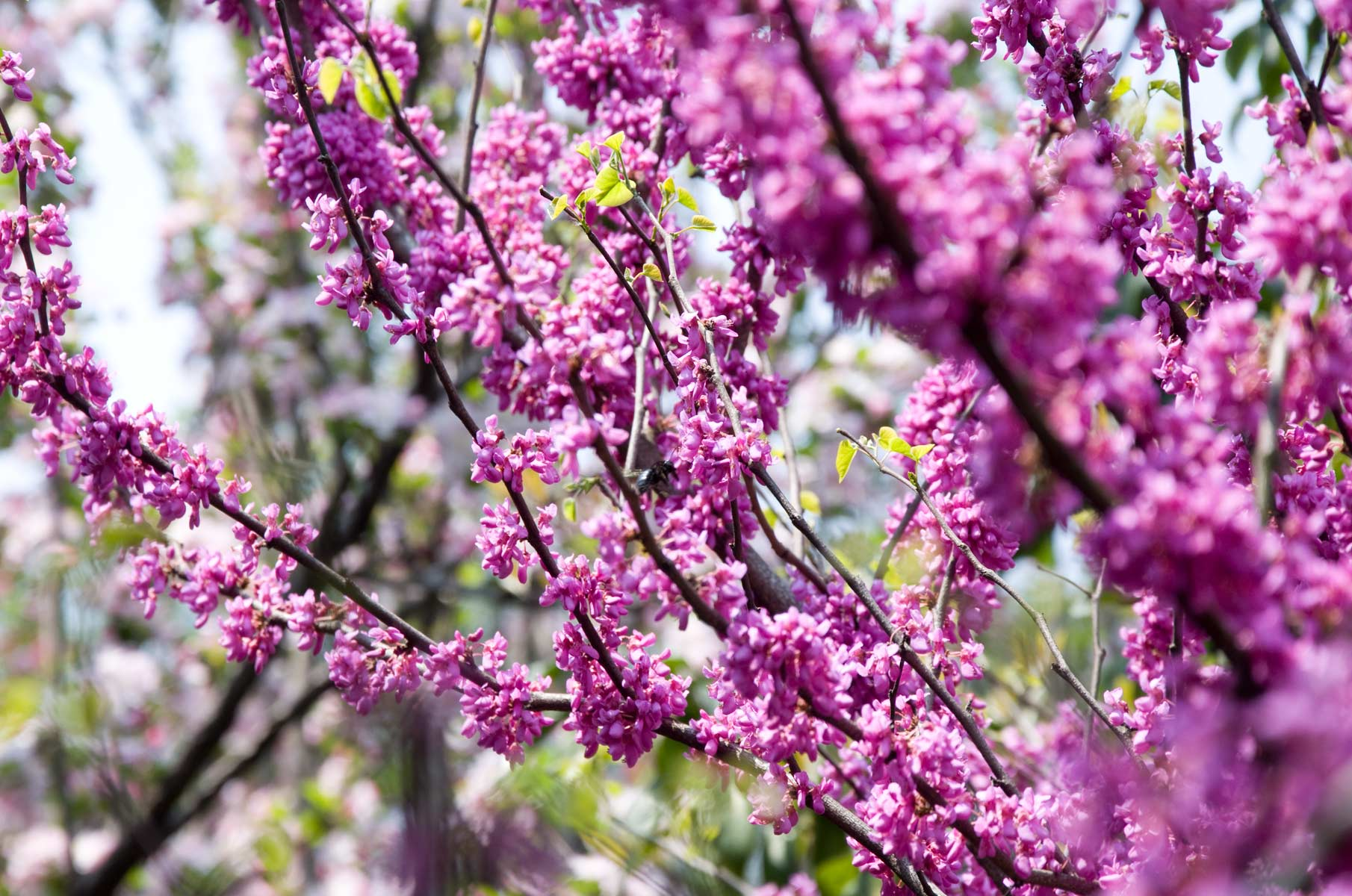 Blüten im Liu Garten in Suzhou, China