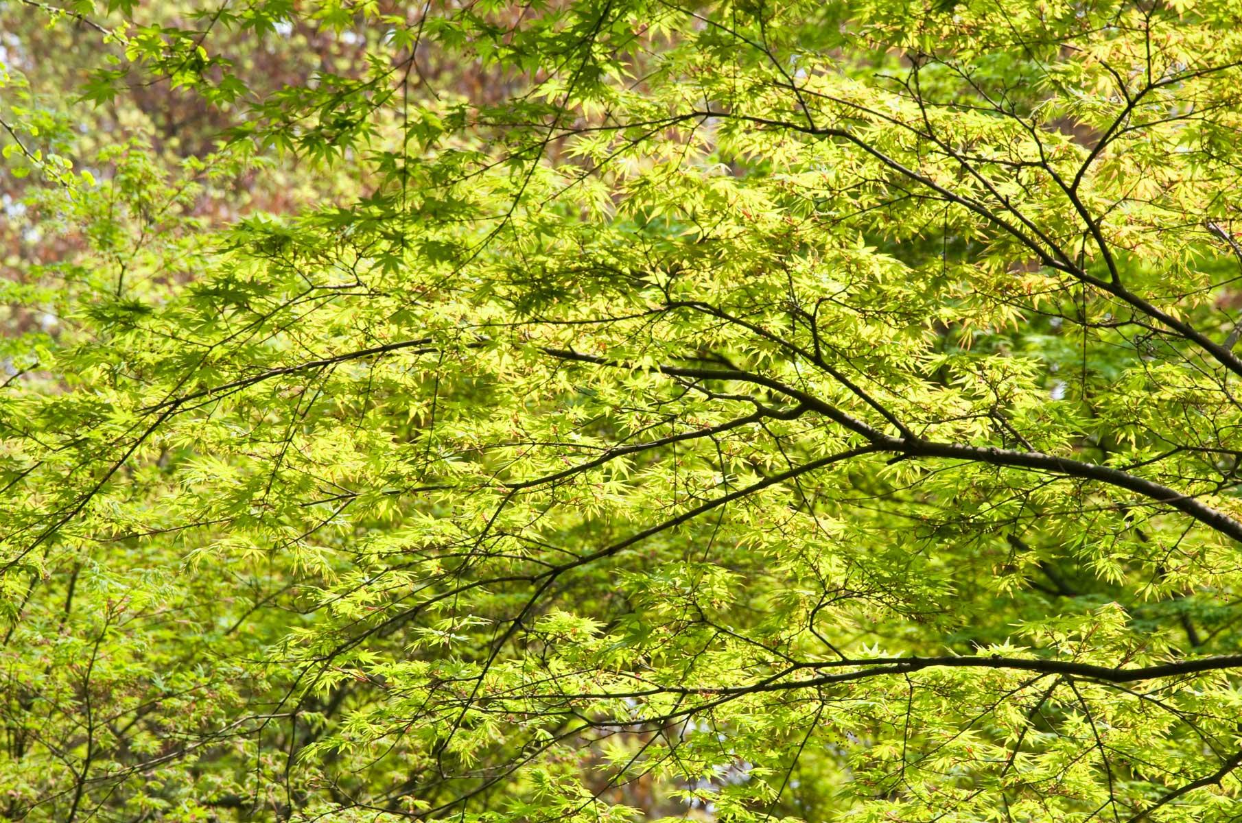 Grüne Blätter im Liu Garten in Suzhou, China