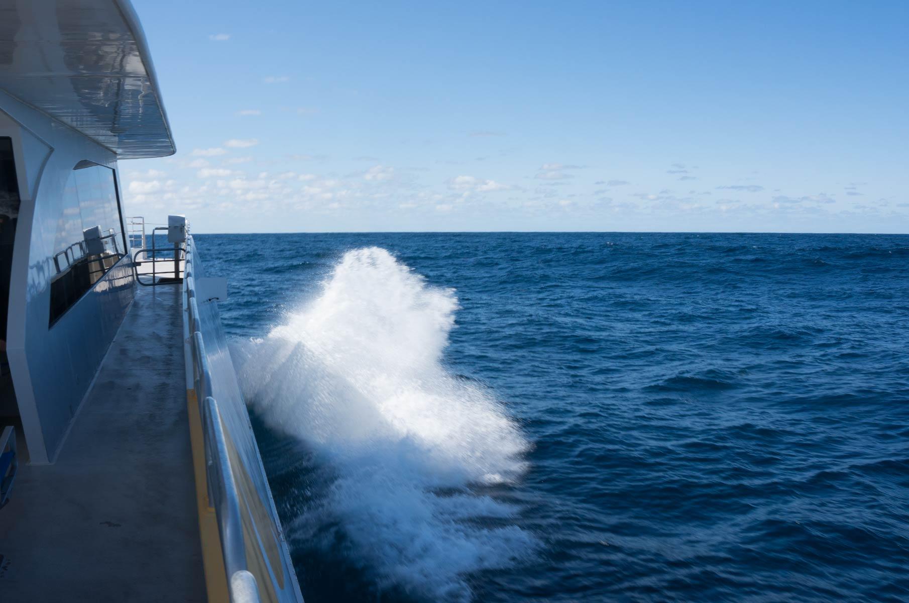 Whale Watching vor der Küste Sydneys, Australien