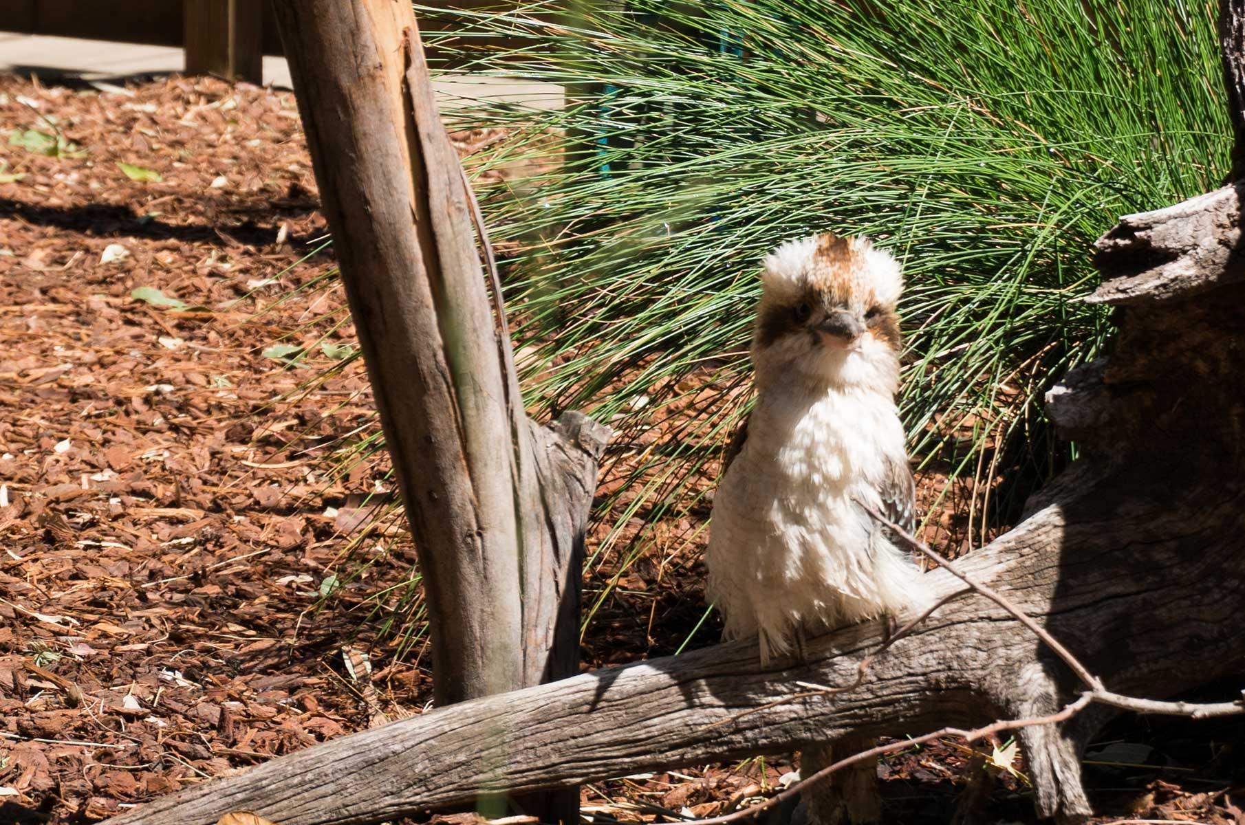 Featherdale Wildlife Park in Sydney, Australien