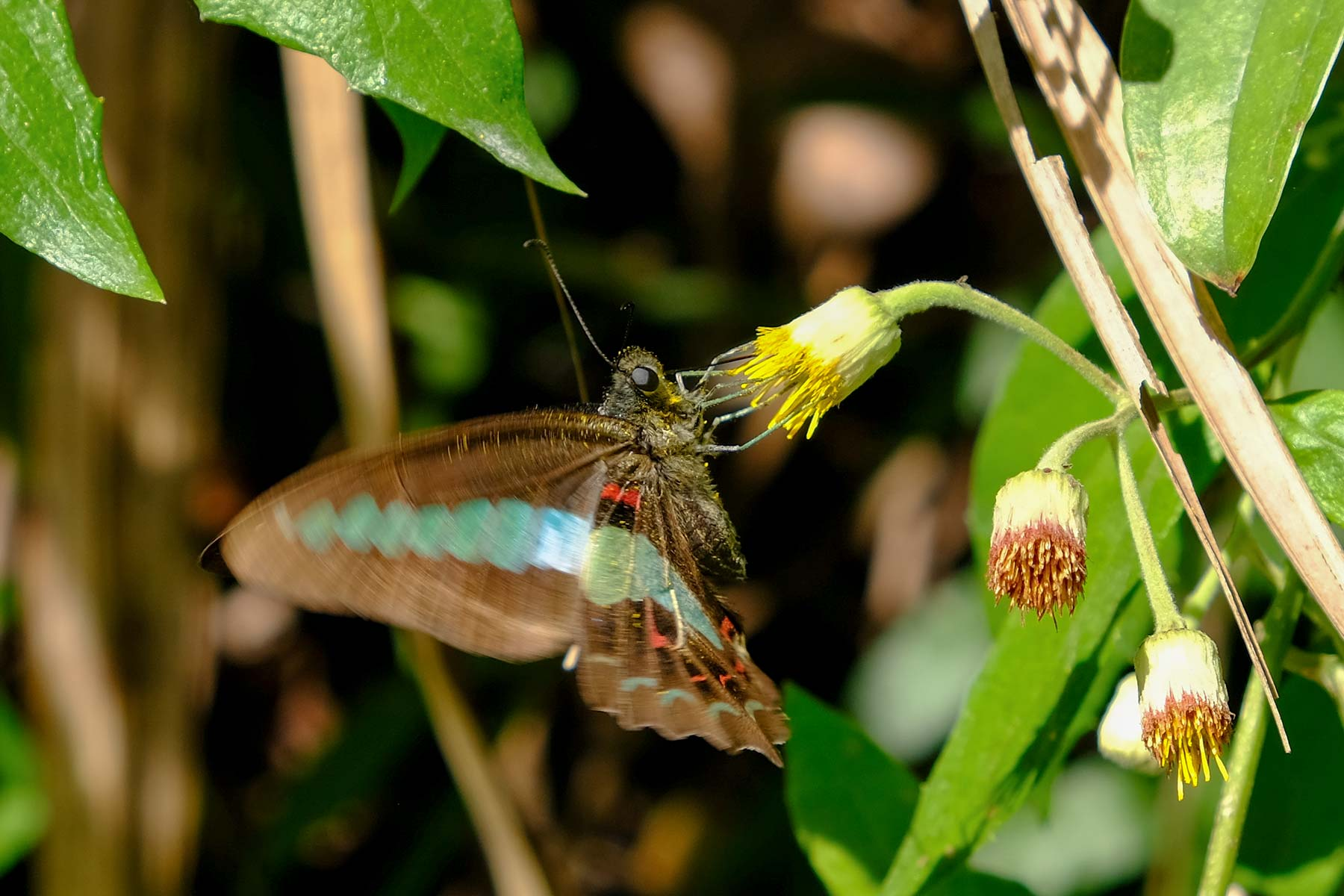 Schmetterling im Taroko Nationalpark