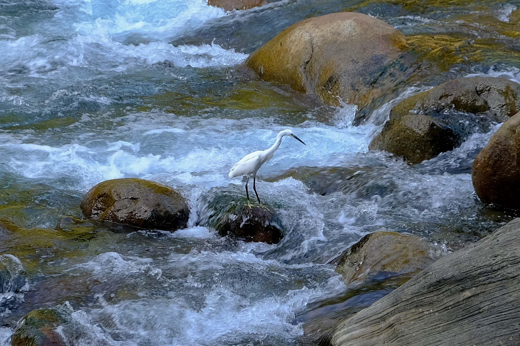 Ein Reiher auf Fischfang im Taroko Nationalpark