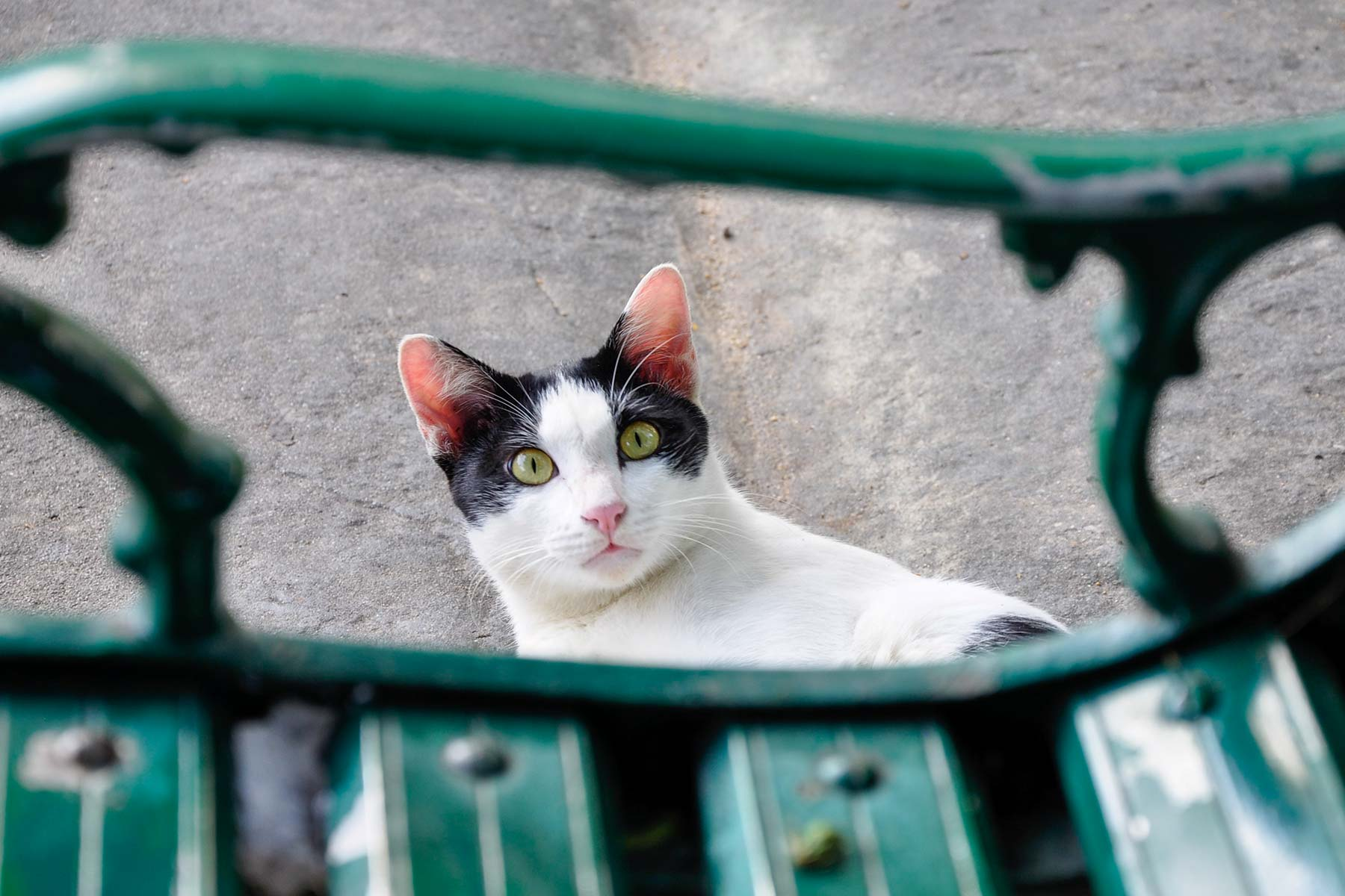 Katze in Bangkok, Thailand