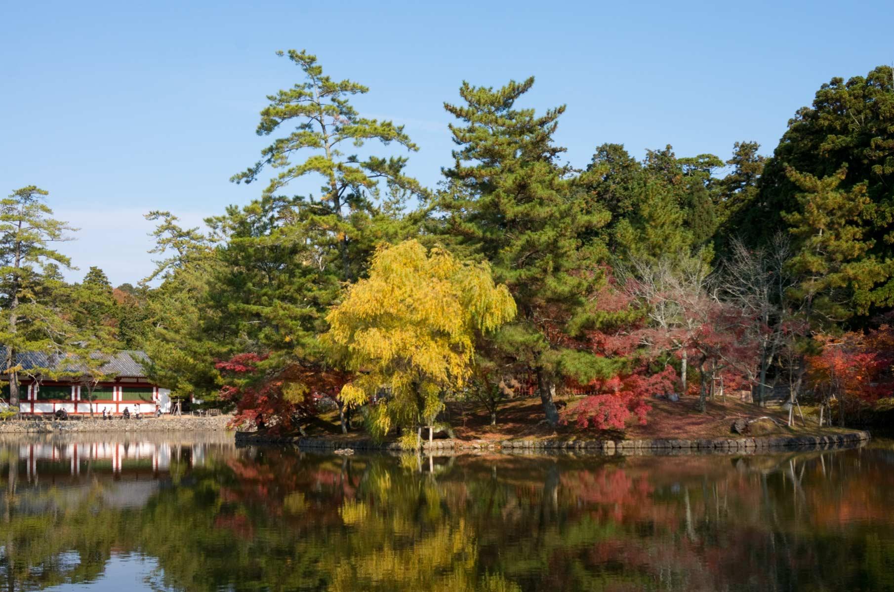 Herbstlaub am See im Nara Park in Nara, Japan