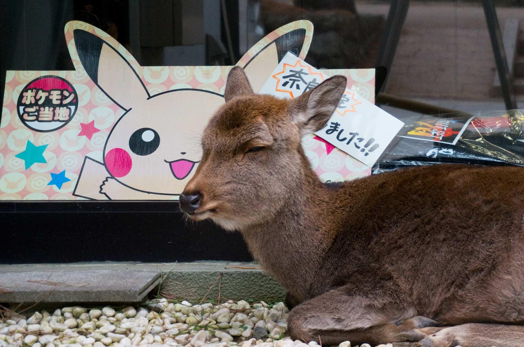 Schlafendes Reh im Nara Park in Nara, Japan