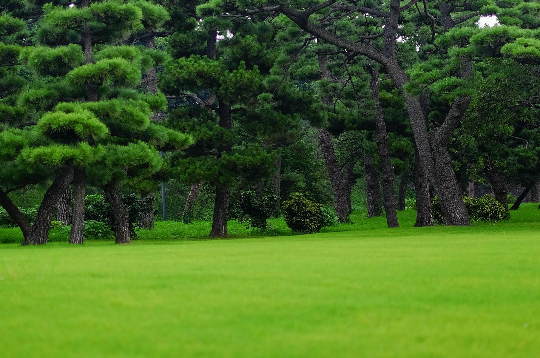 Kokyogaien National Park in Tokyo, Japan