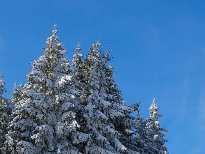 Schneewanderung in den Vogesen