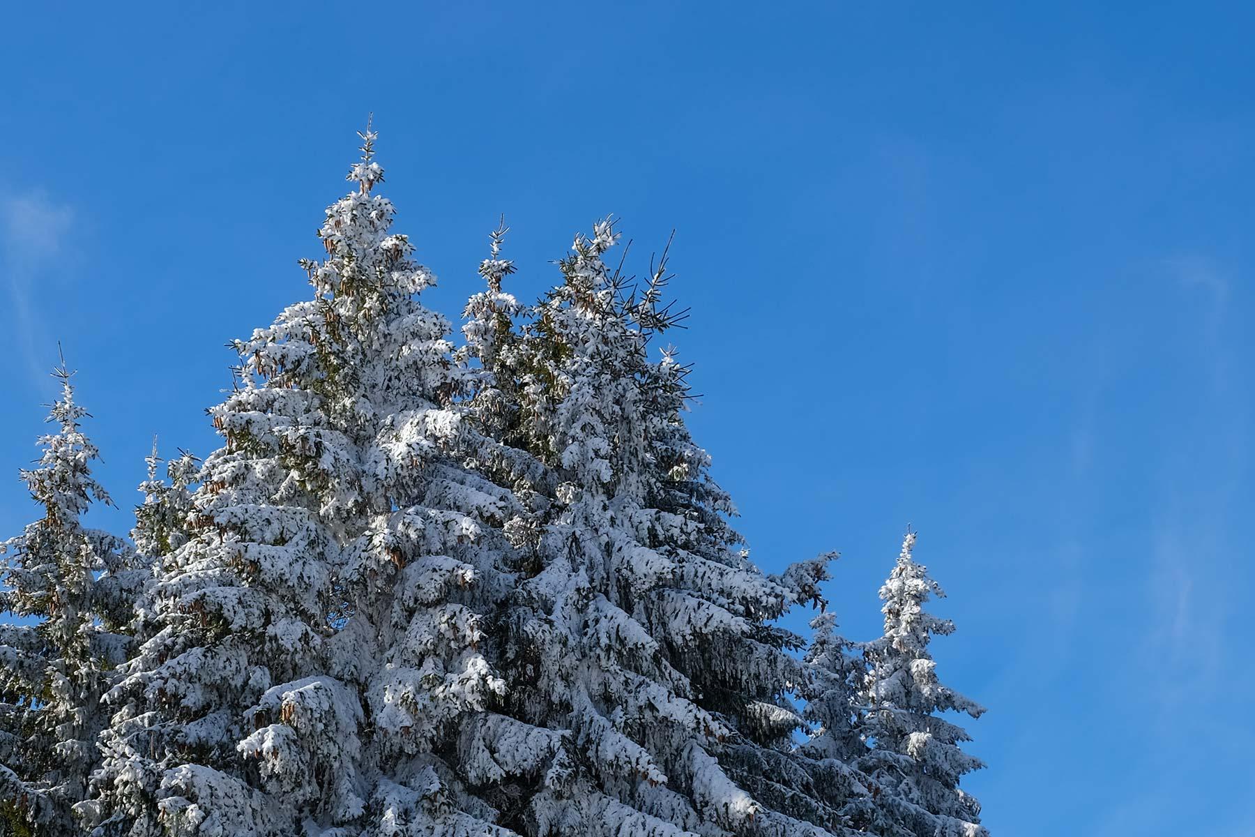 Winterlandschaft Schnee in den Vogesen im Winter